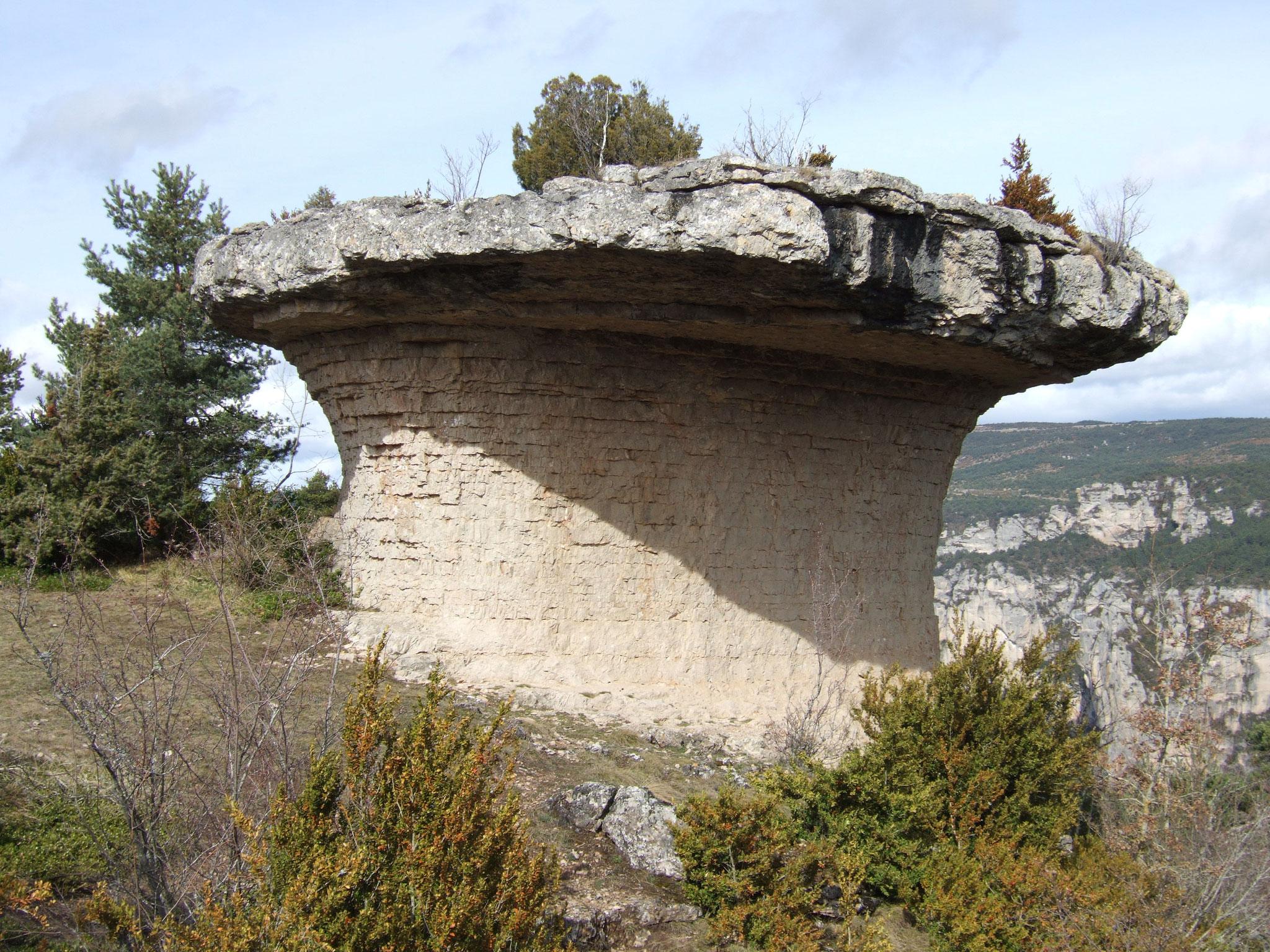 Champignon protohistorique / causse Méjean