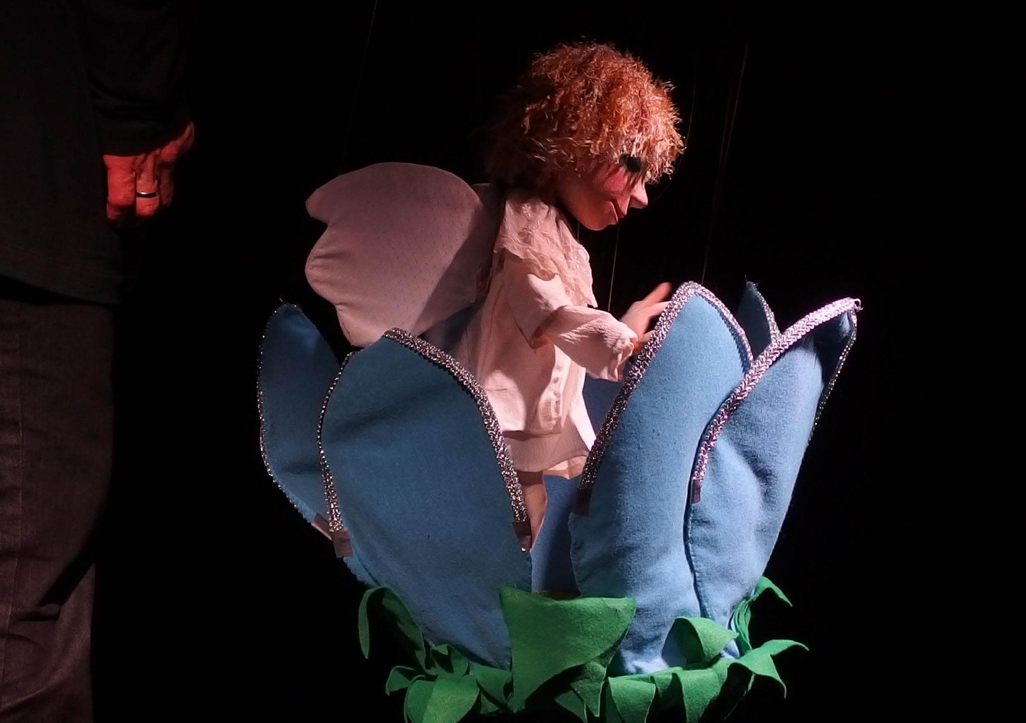 Marionettentheater Zaubervogel: Prinz Tulipan