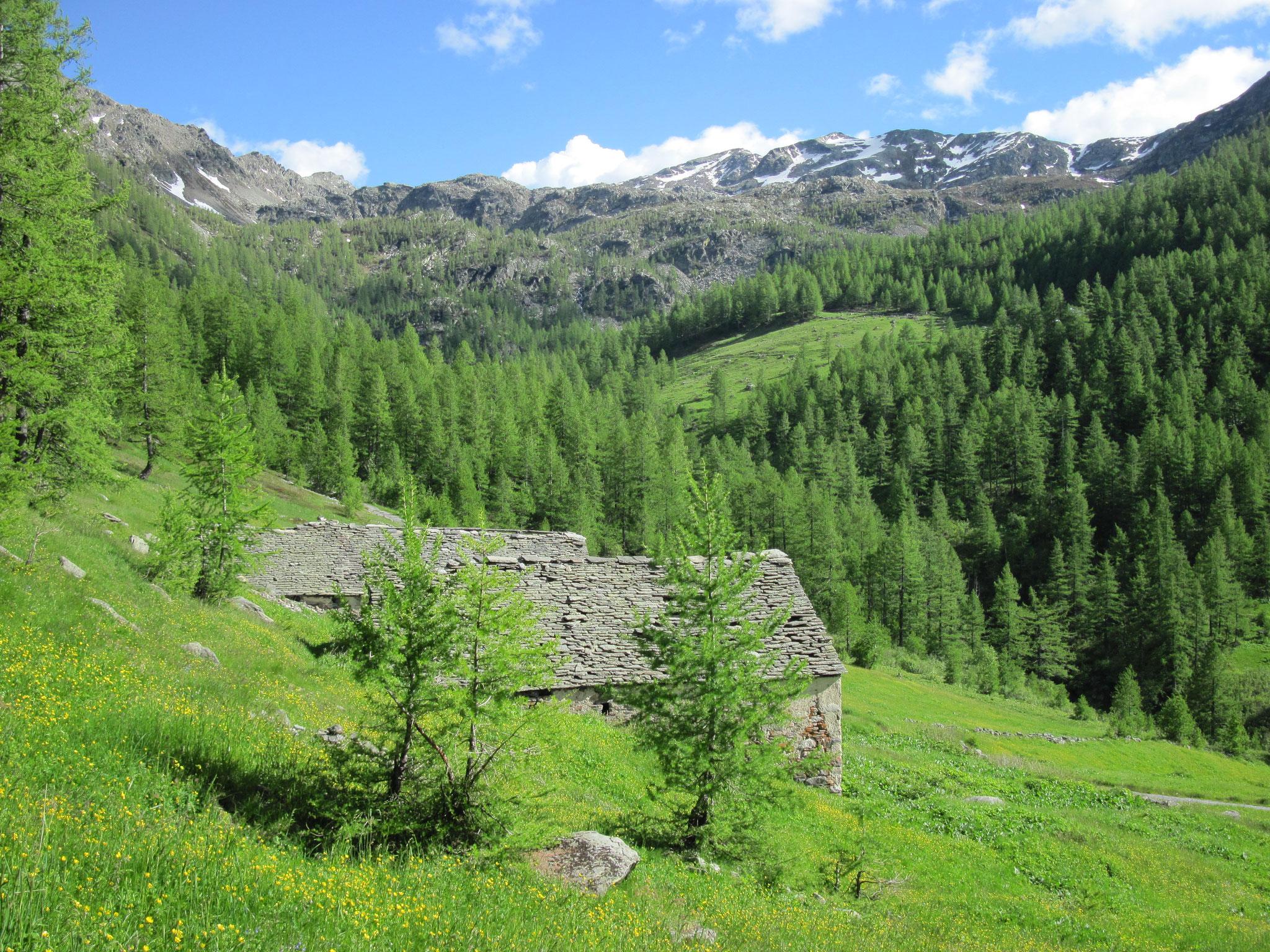 Ausblick Alp Waira