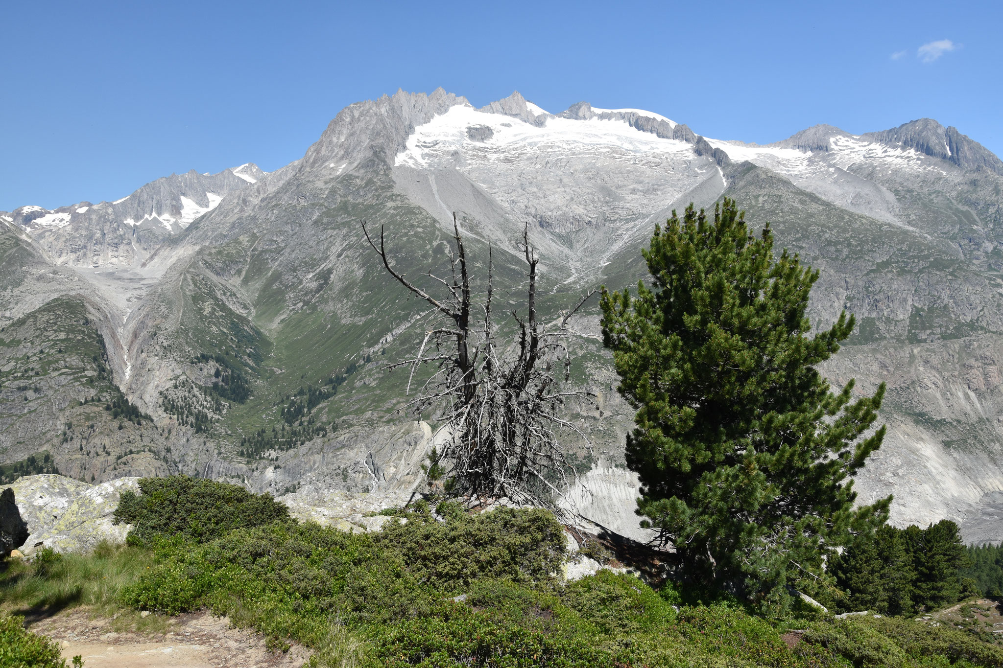 Blick richtung Oberaletschgletscher, Fusshörner und Aletschji