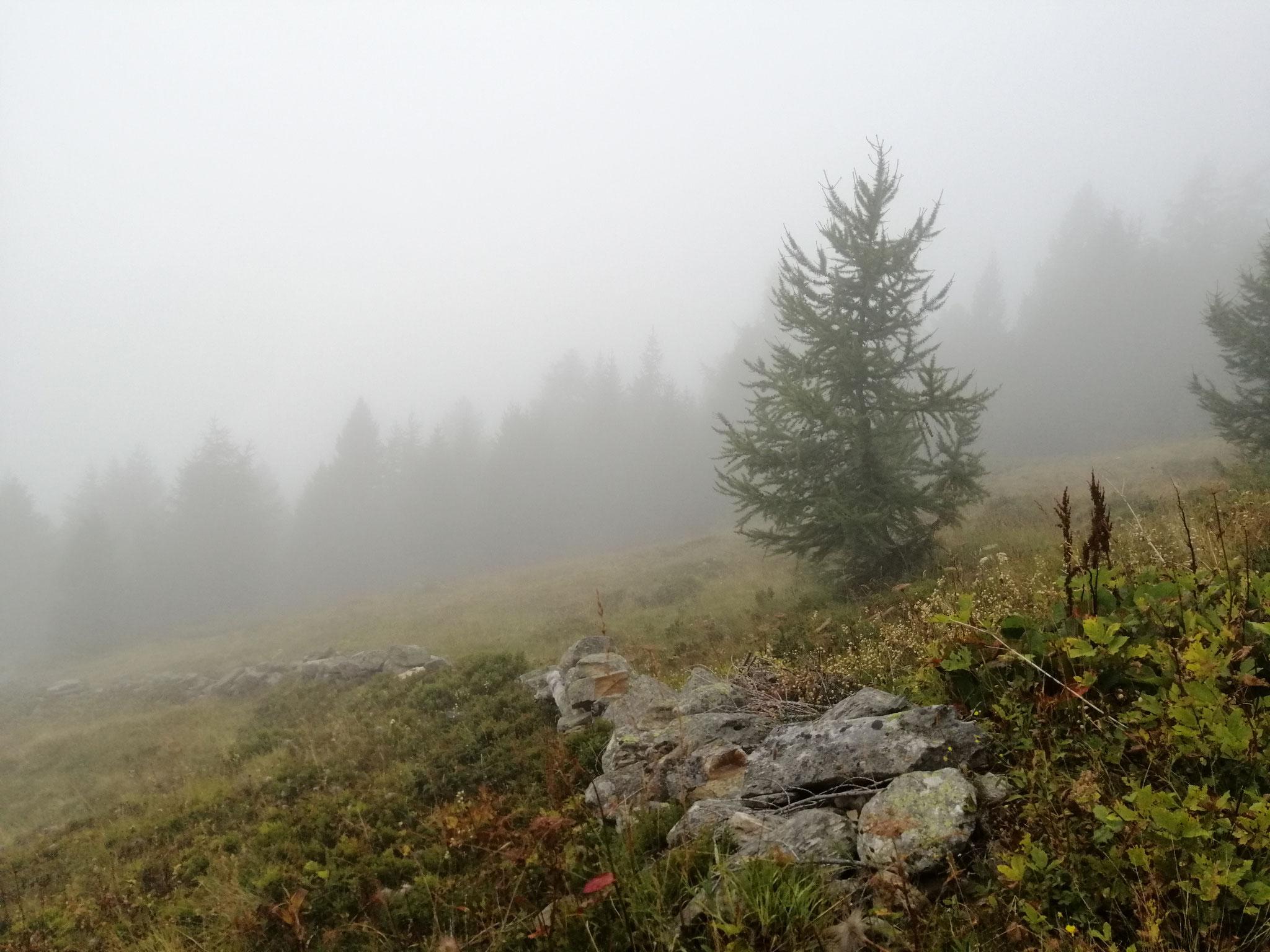 Nebelstimmung am Waldrand