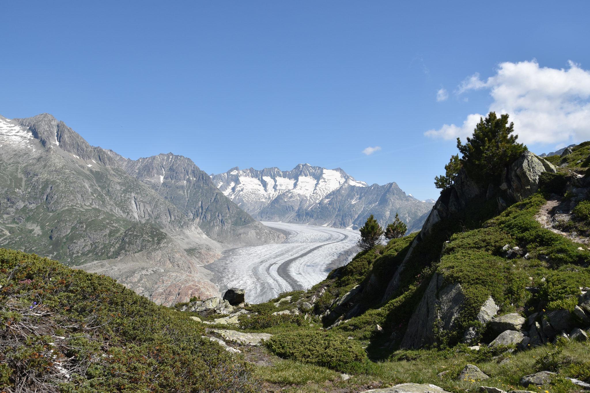 Der Grosse Aletschgletscher