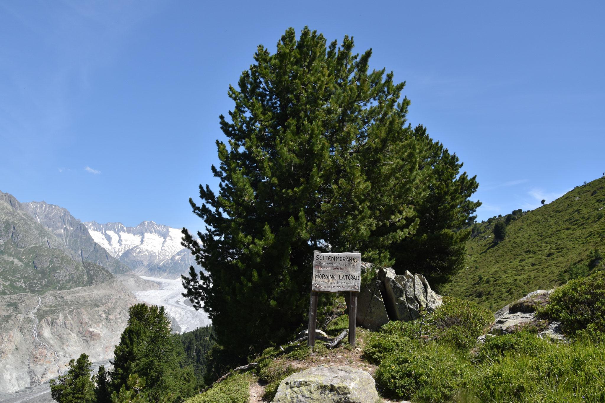 Seitenmoräne - Naturdenkmal aus der letzten Eiszeit