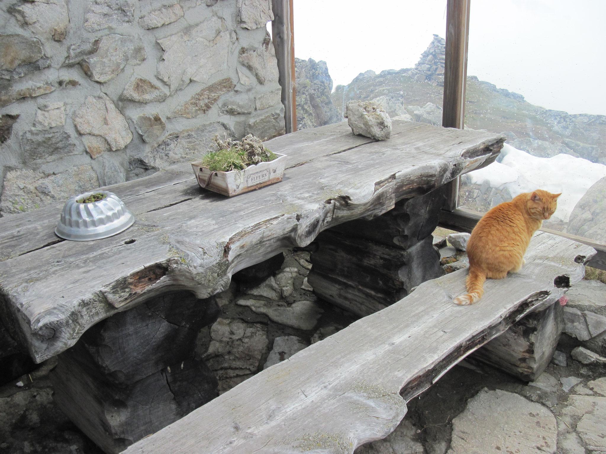 Hüttenkater geniesst das Bergleben