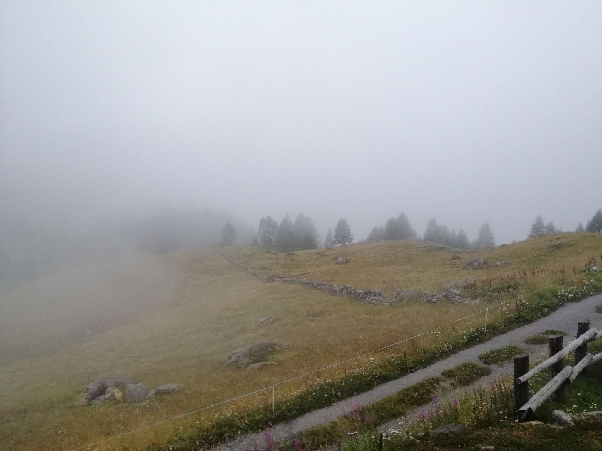 Nebelstimmung Wintrigmatte