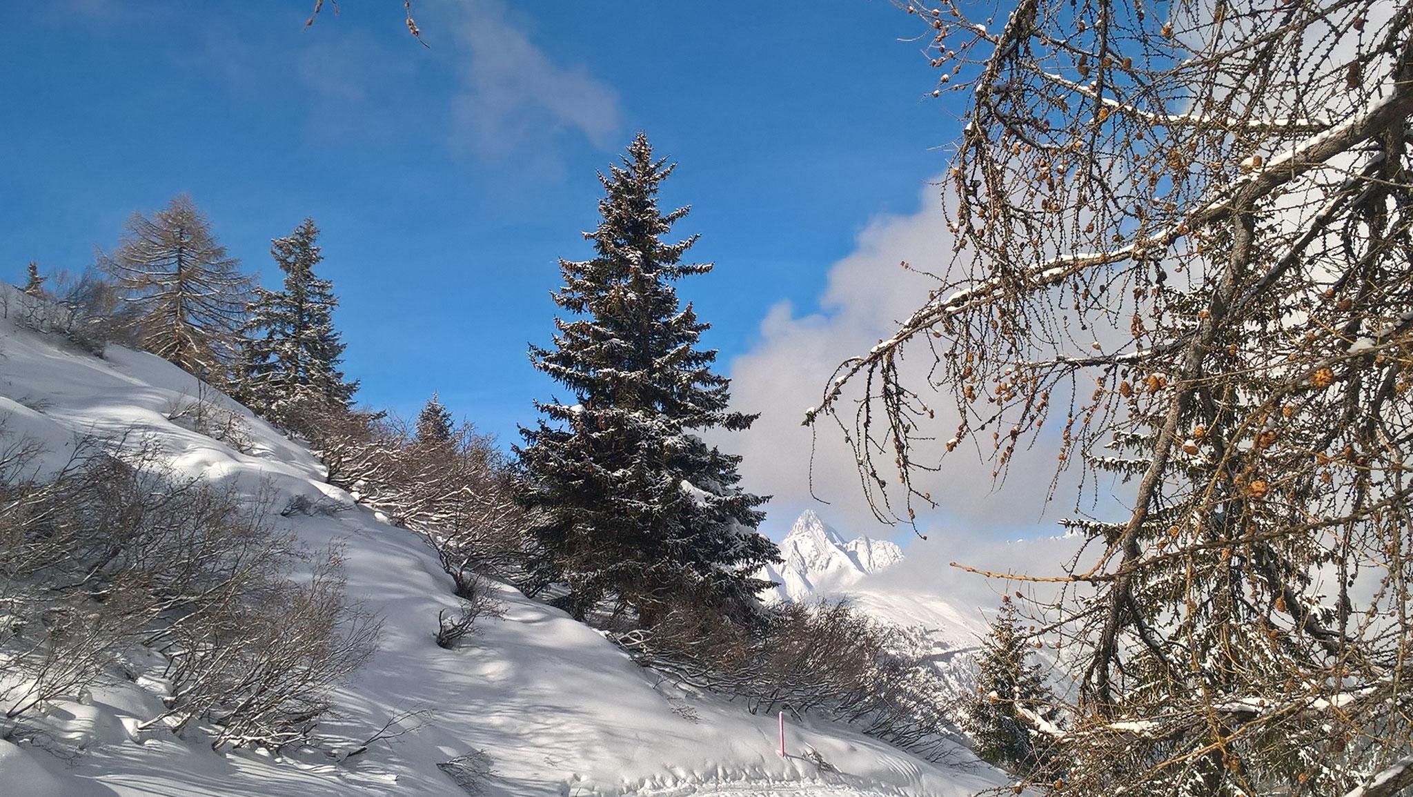 Durchblick zum Bietschhorn