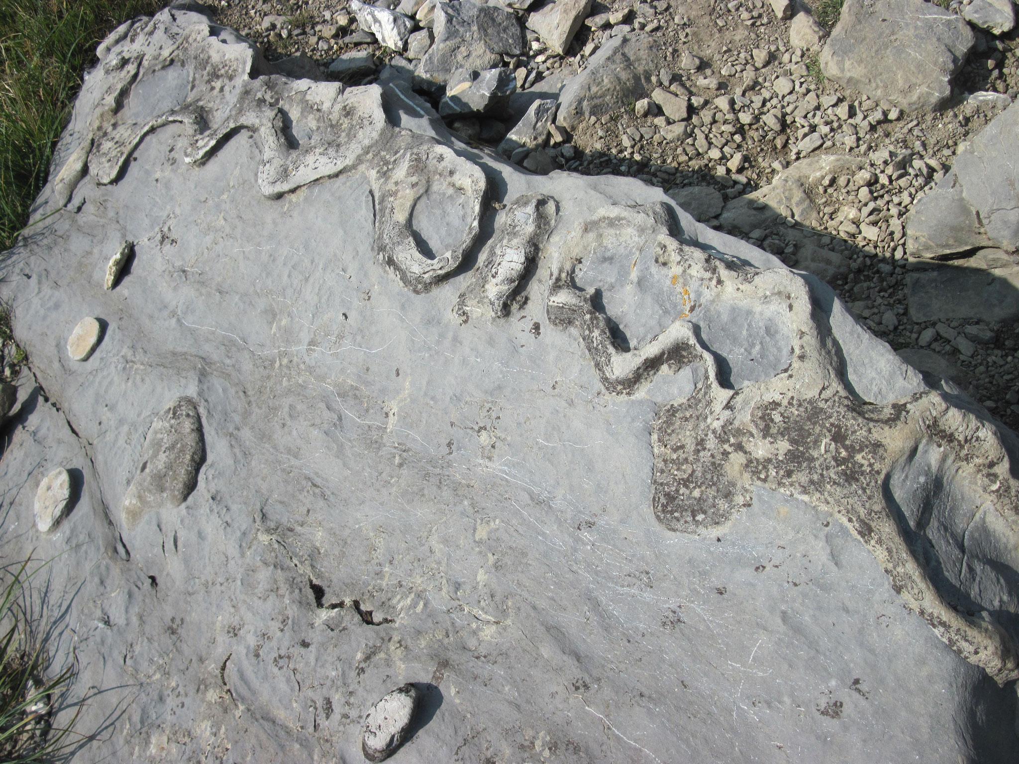 Wieder einmal interessante Steine gefunden