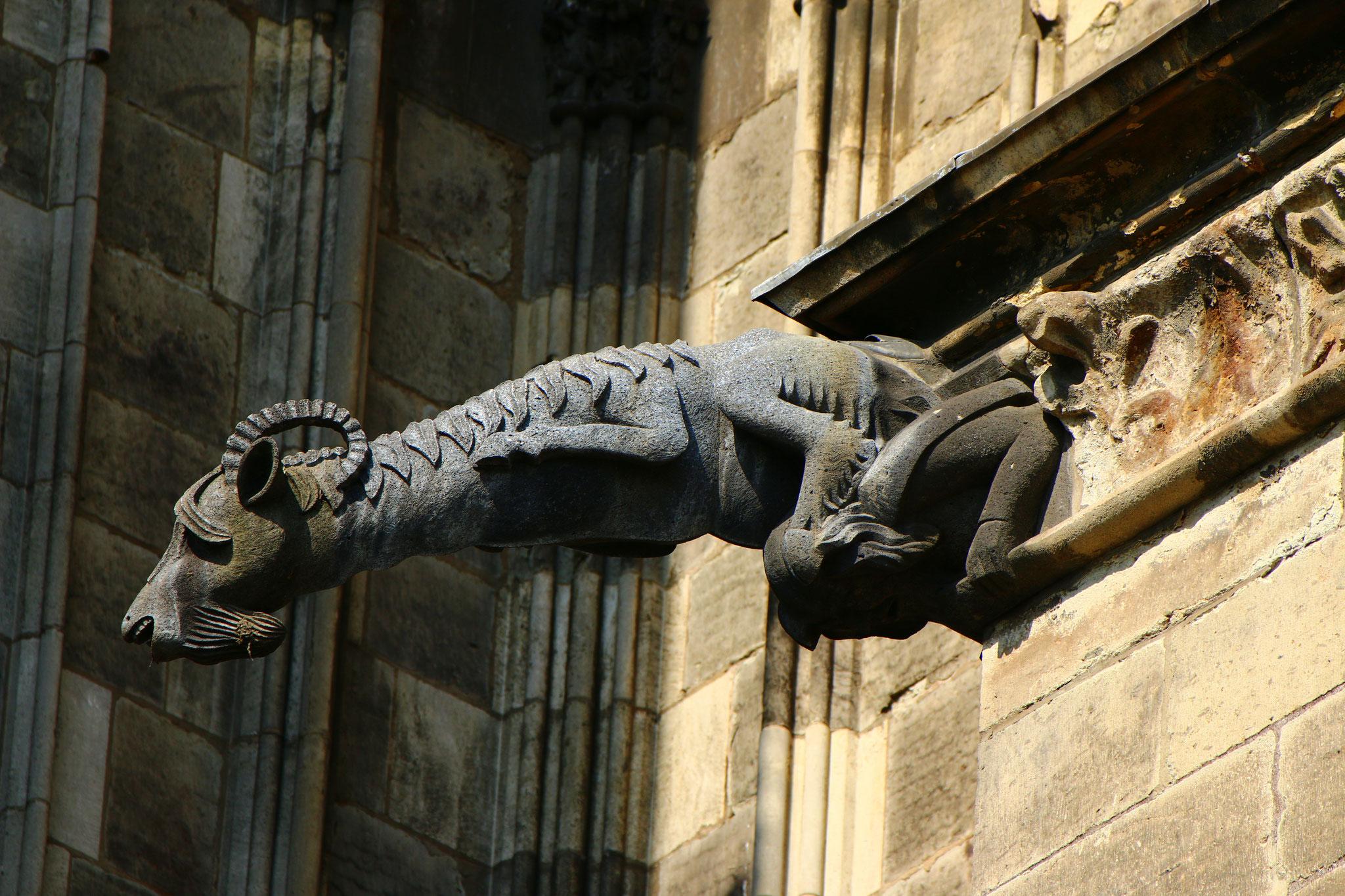 Einer der großen Wasserspeier am Domchor - Hennes (IX.)??