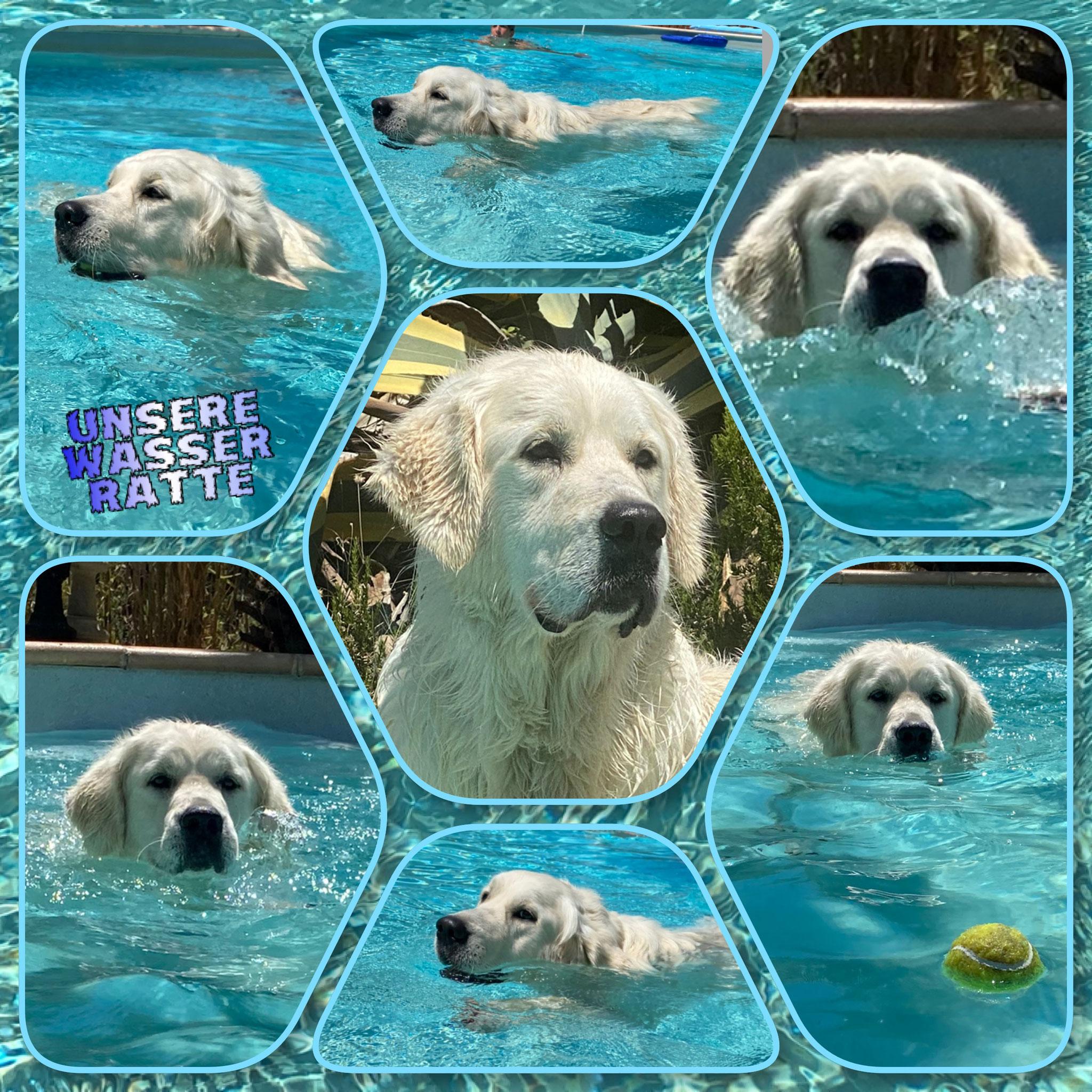 Ich durfte sogar in den Swimmingpool der Menschen :-)