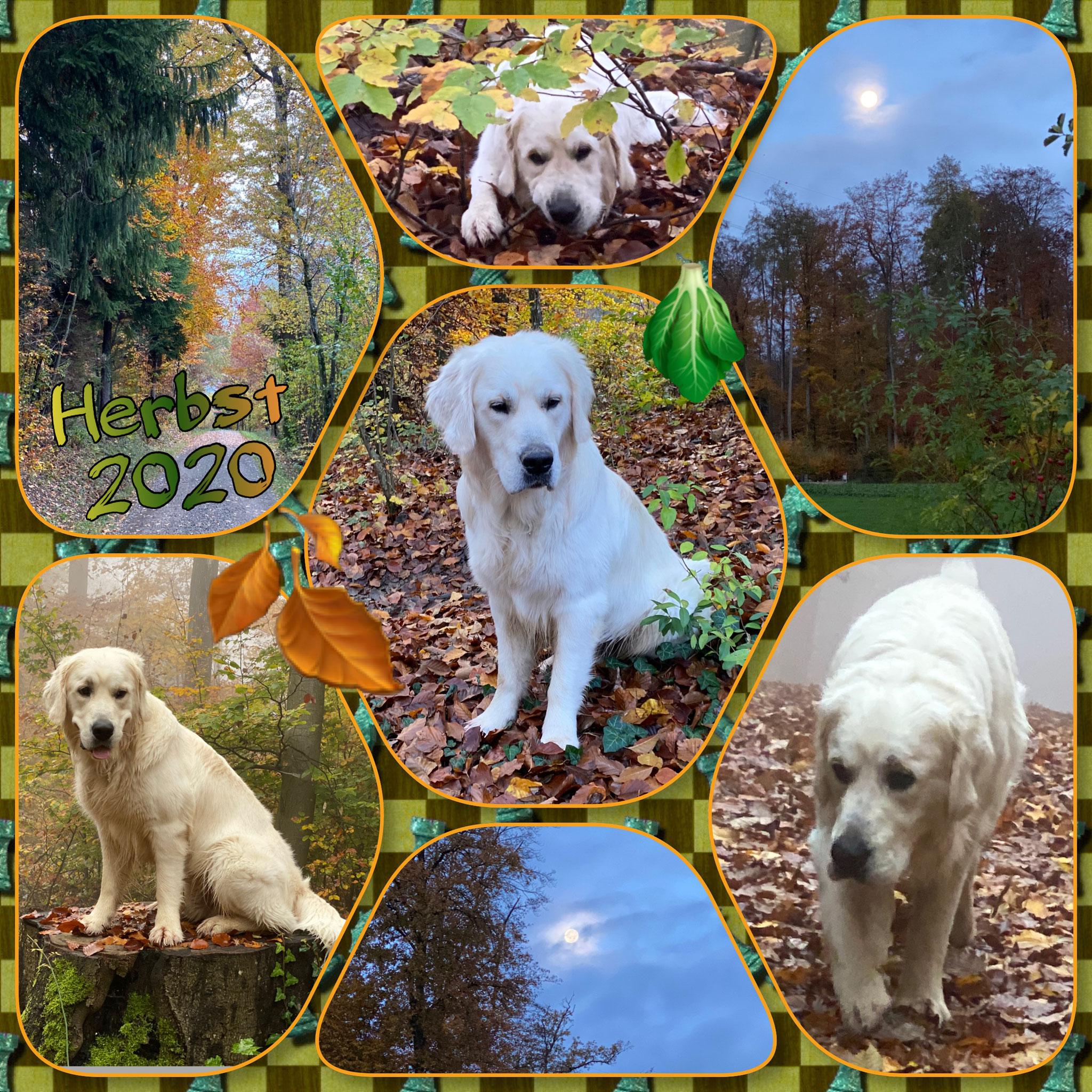 Wie schön das doch im Herbst im Wald ist!