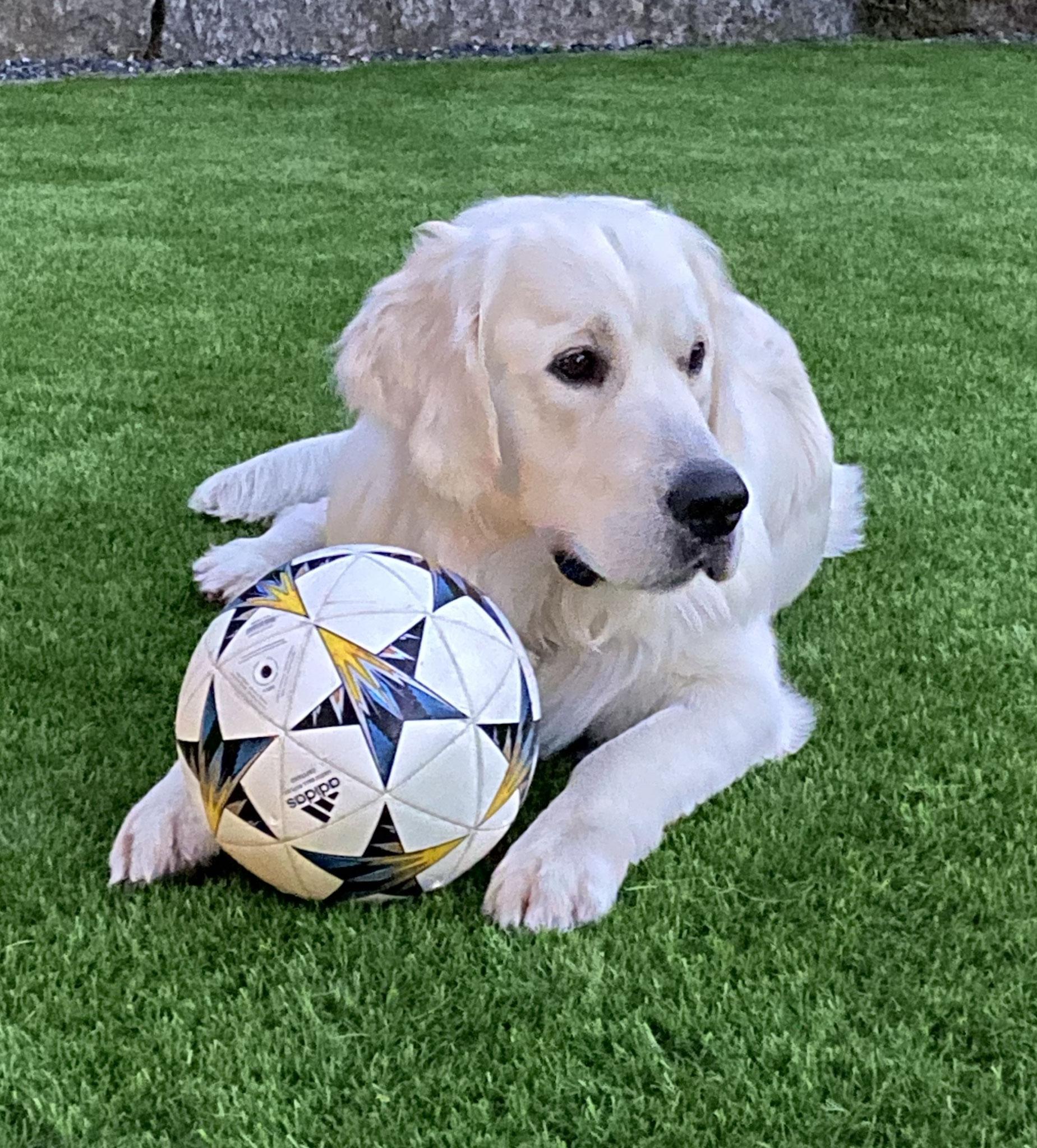 Fussball von meinem Nachbarn Sisley - DANKE Sisley! Freue mich SEHR darüber!!!