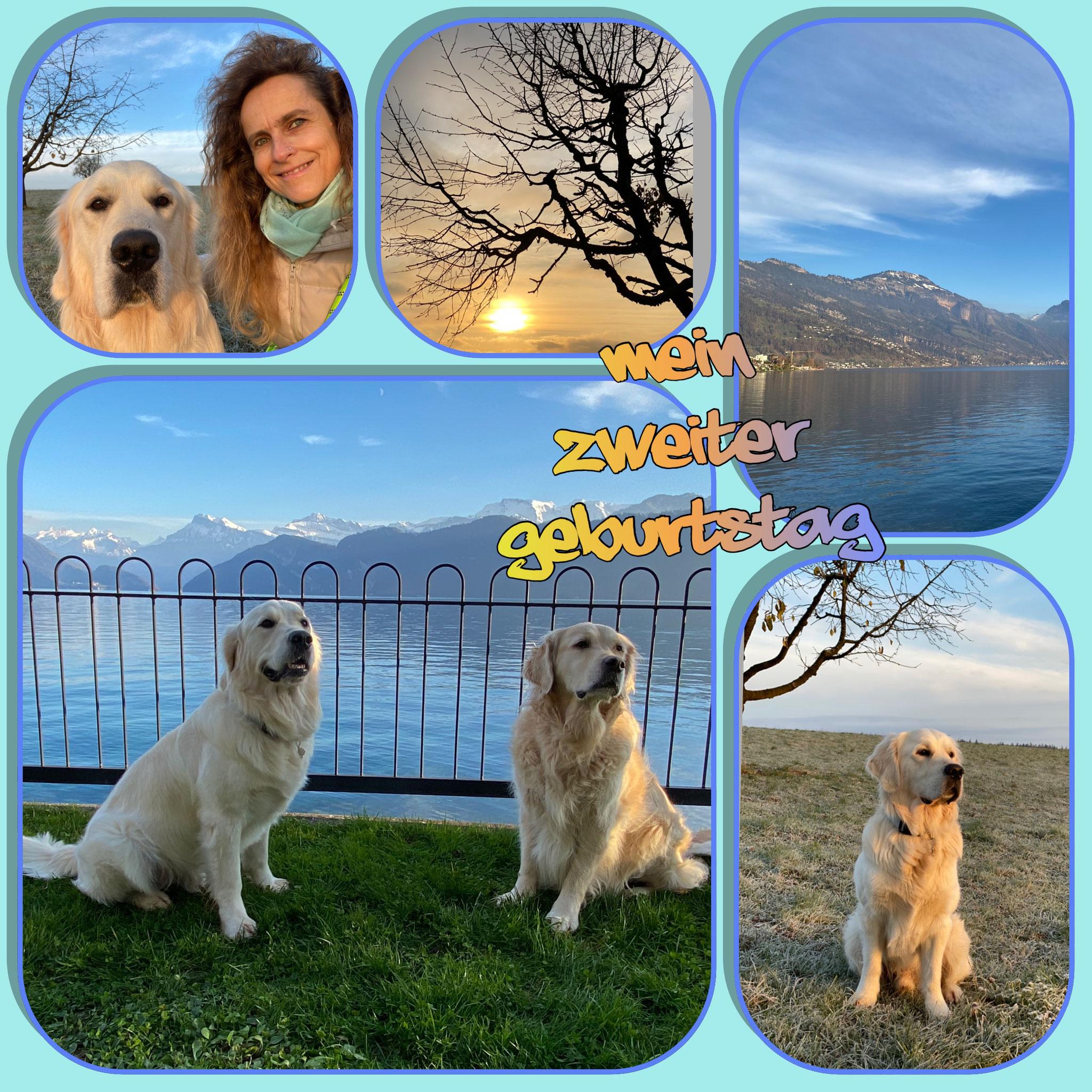 Besuch bei Aron in Weggis an meinem zweiten Geburtstag. Ich lerne von ihm, einen Therapiehund zu werden...
