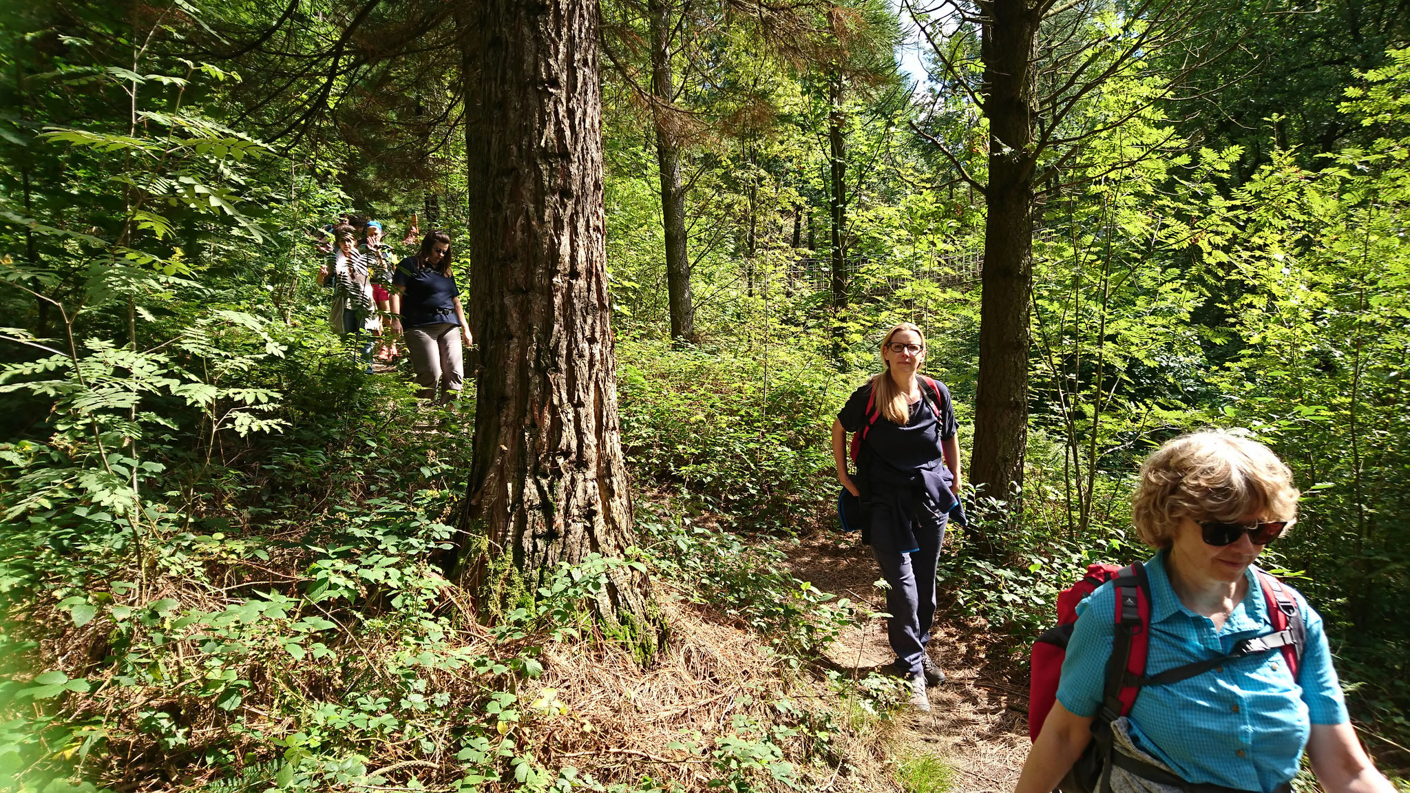 Harzer Wälder satt und grün ...