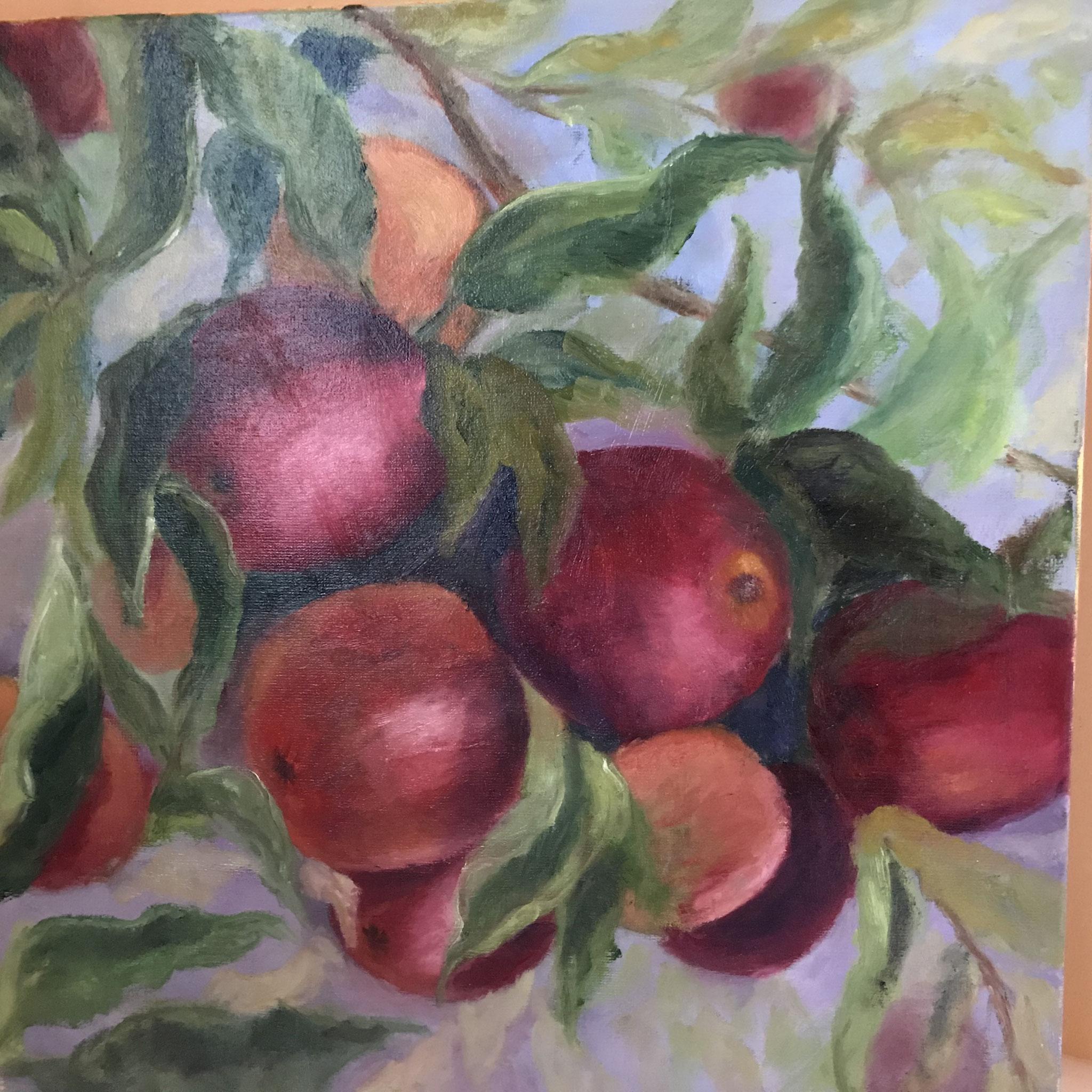 Grote paarsrode appels. 60x60cm. olie op linnen. 2018.