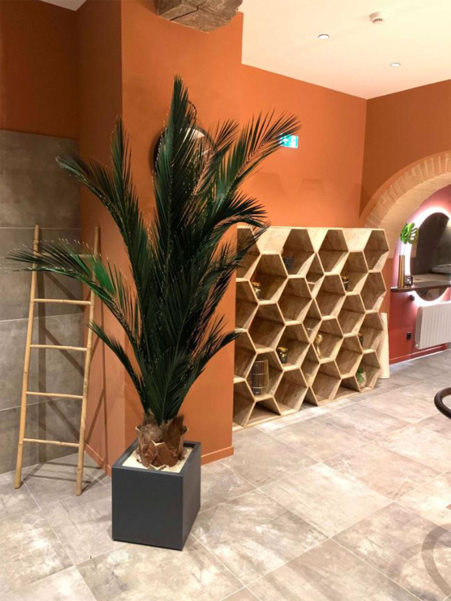 Plantes (RAPHAEL PERRIER)