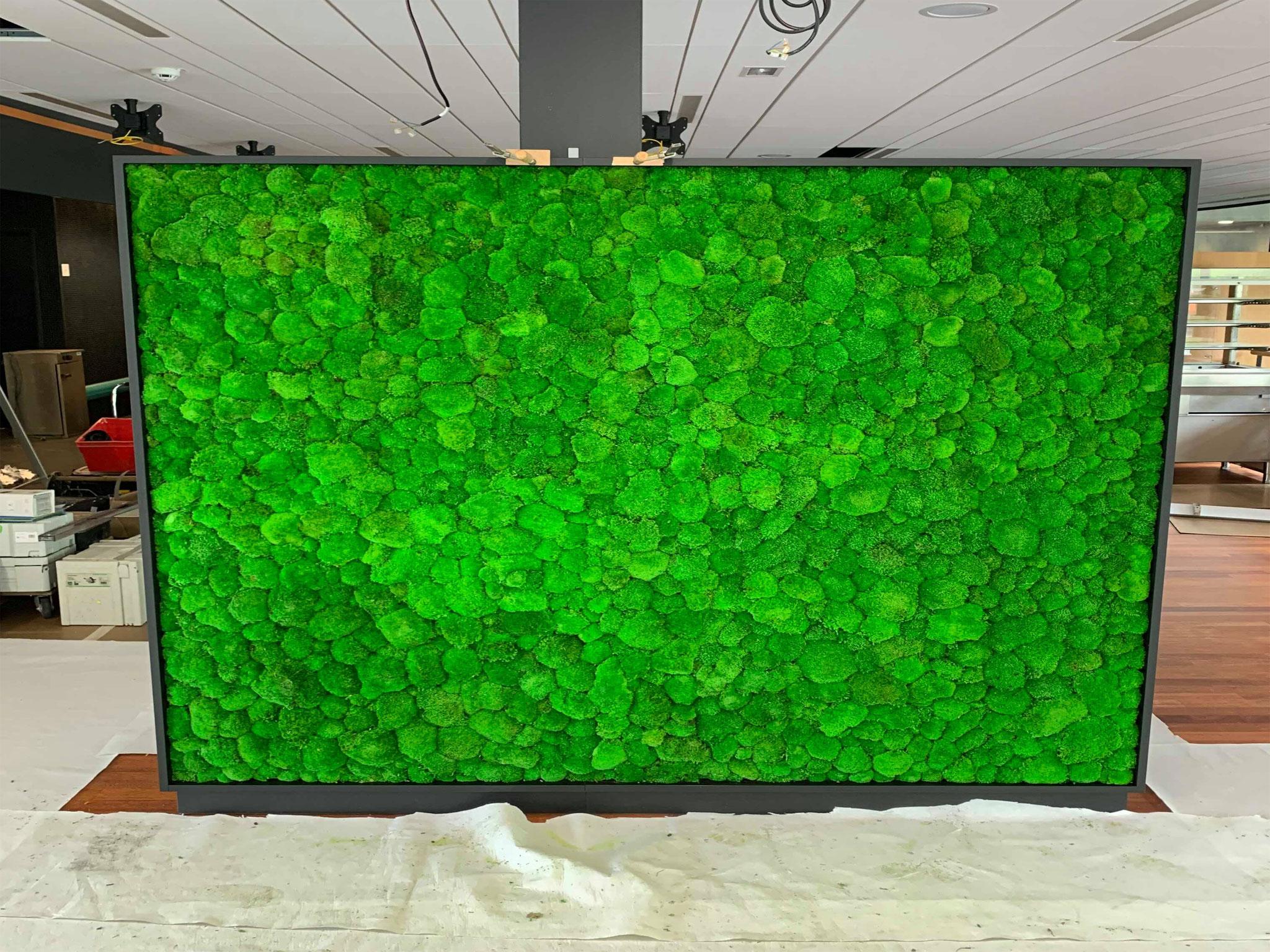 Mur végétal gamme mousse boule (CNP)