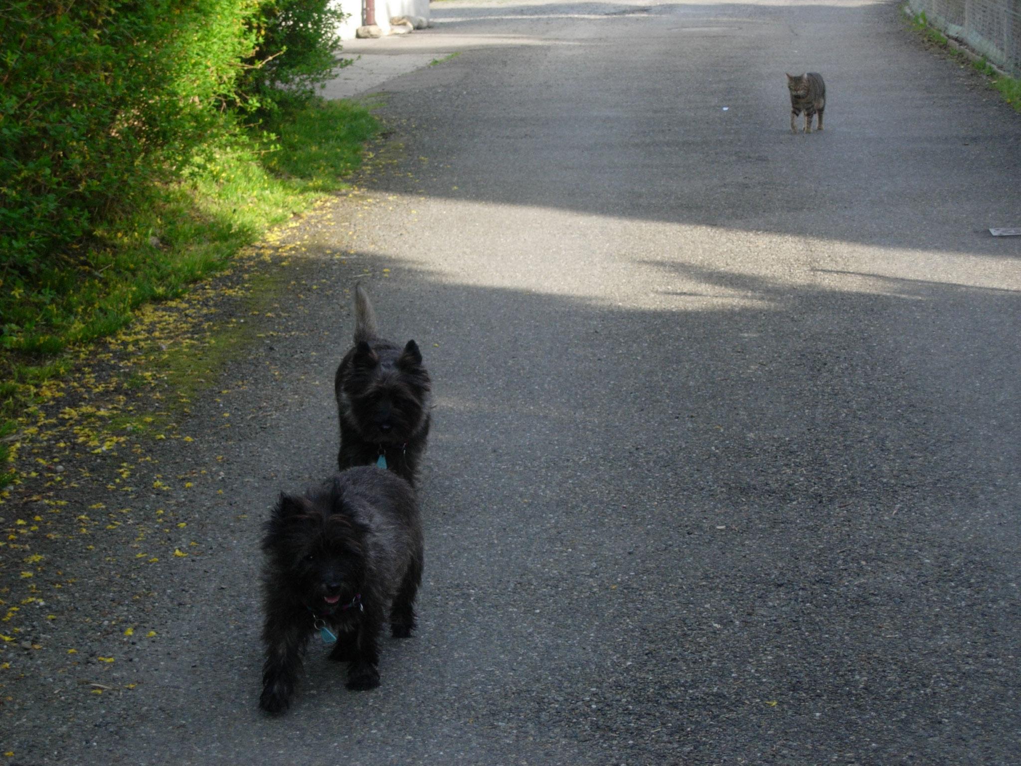 happydogs.ch