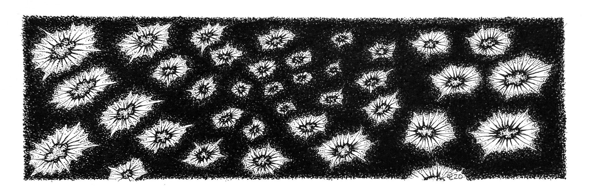 cluster 10 - Zeichnung Fineliner, 7/23 cm