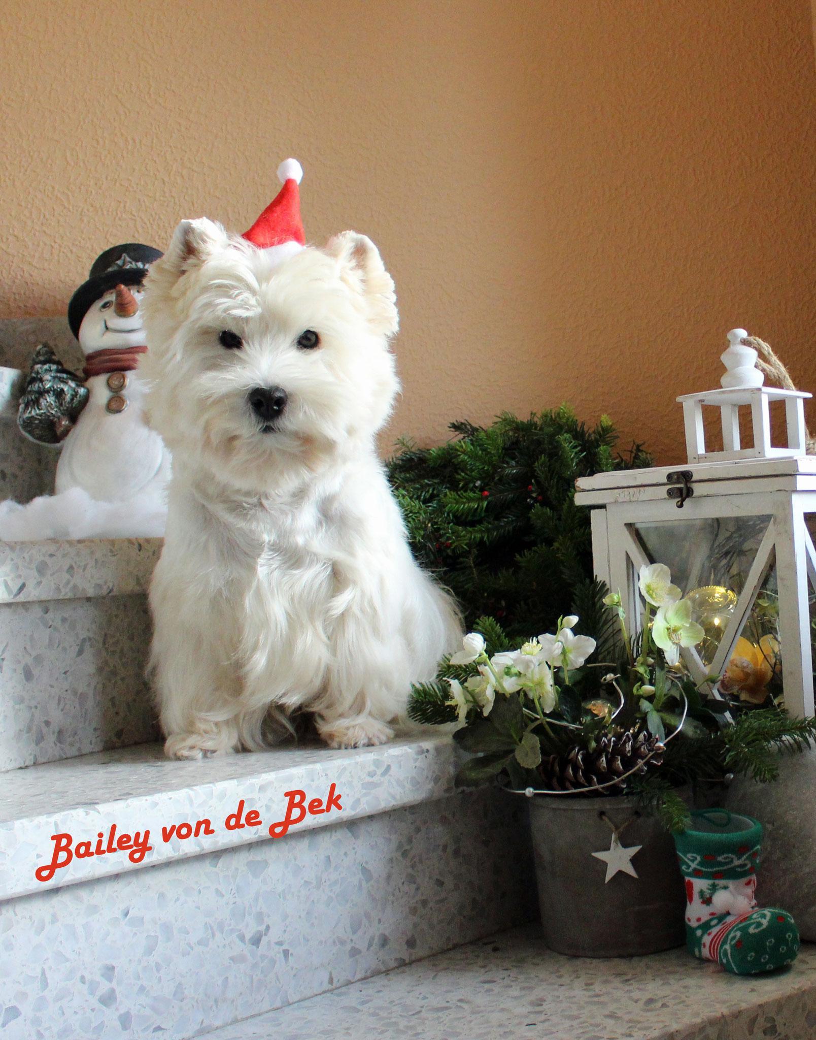 Bailey von de Bek
