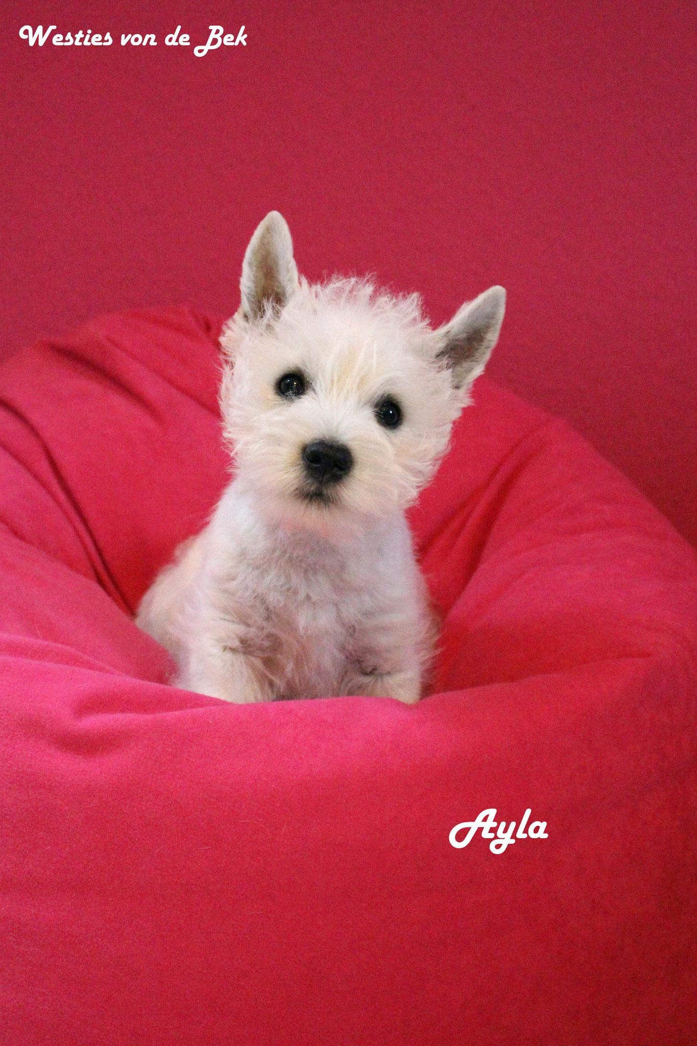Ayla mit 10 Wochen