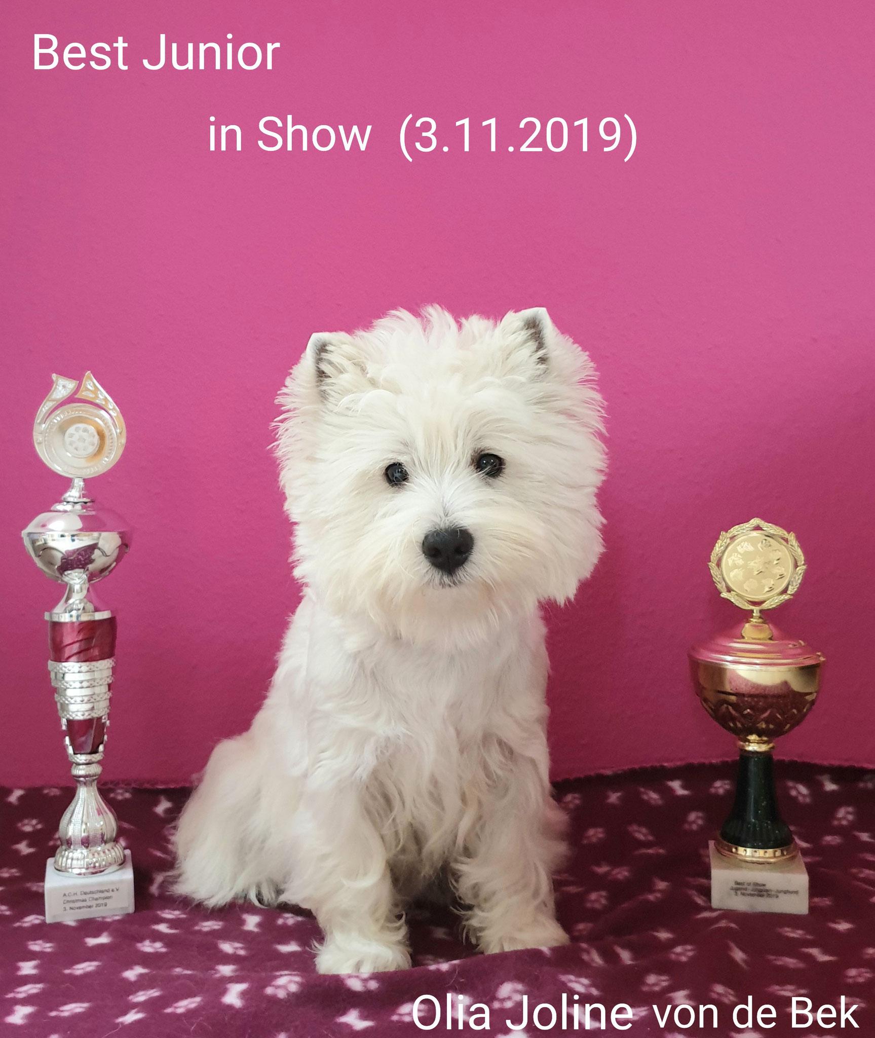 Best Junior in Show 03.11.2019