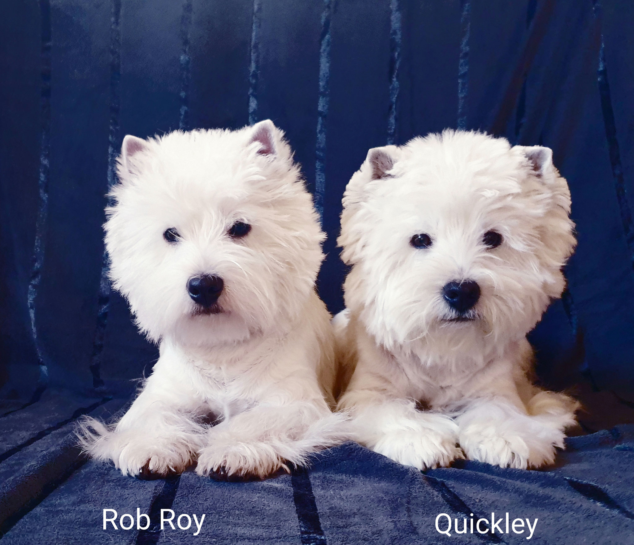 Rob Roy und Quickley 01/2020