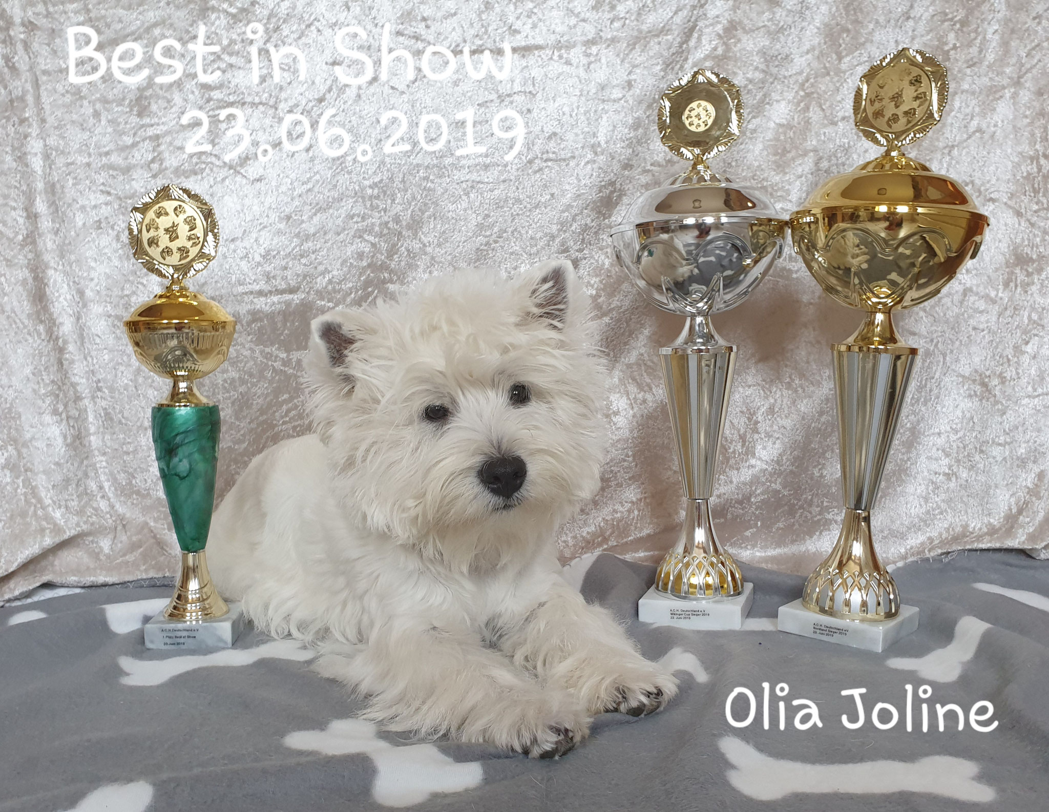 "Olia Joline ""Best in Show"" 06/2019"