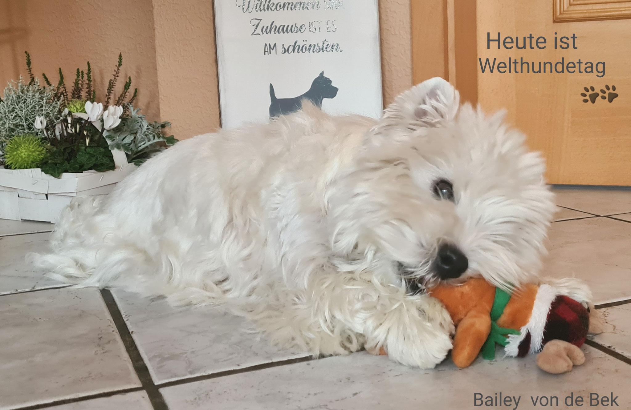 Bailey am 10.10.2020