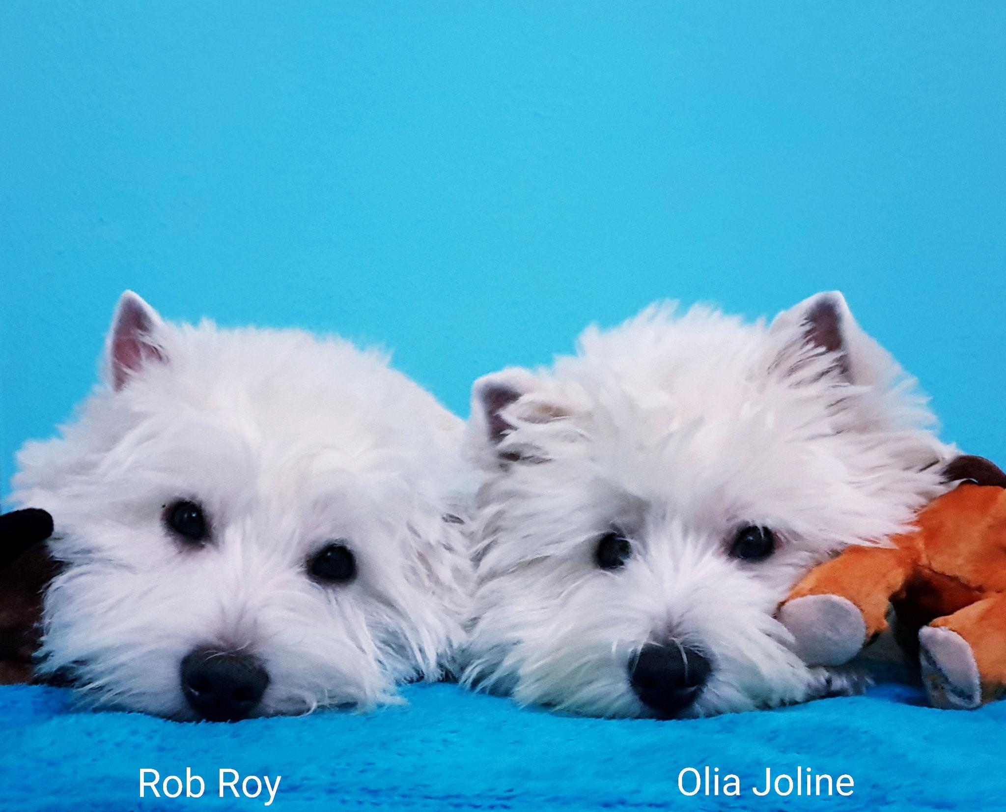 Rob Roy und Olia Joline 12/2019