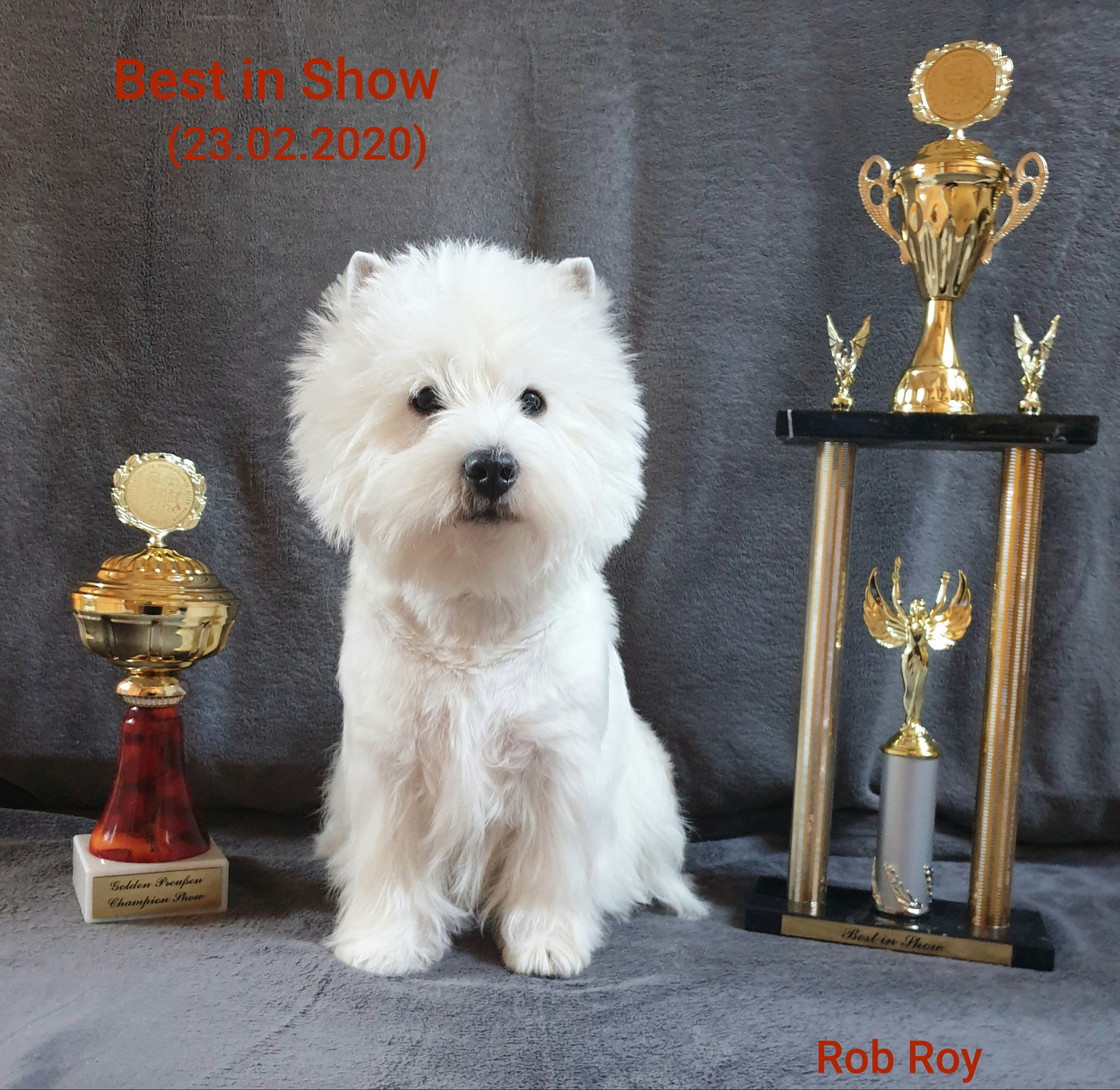 """Rob Roy """"Best in Show"""""""