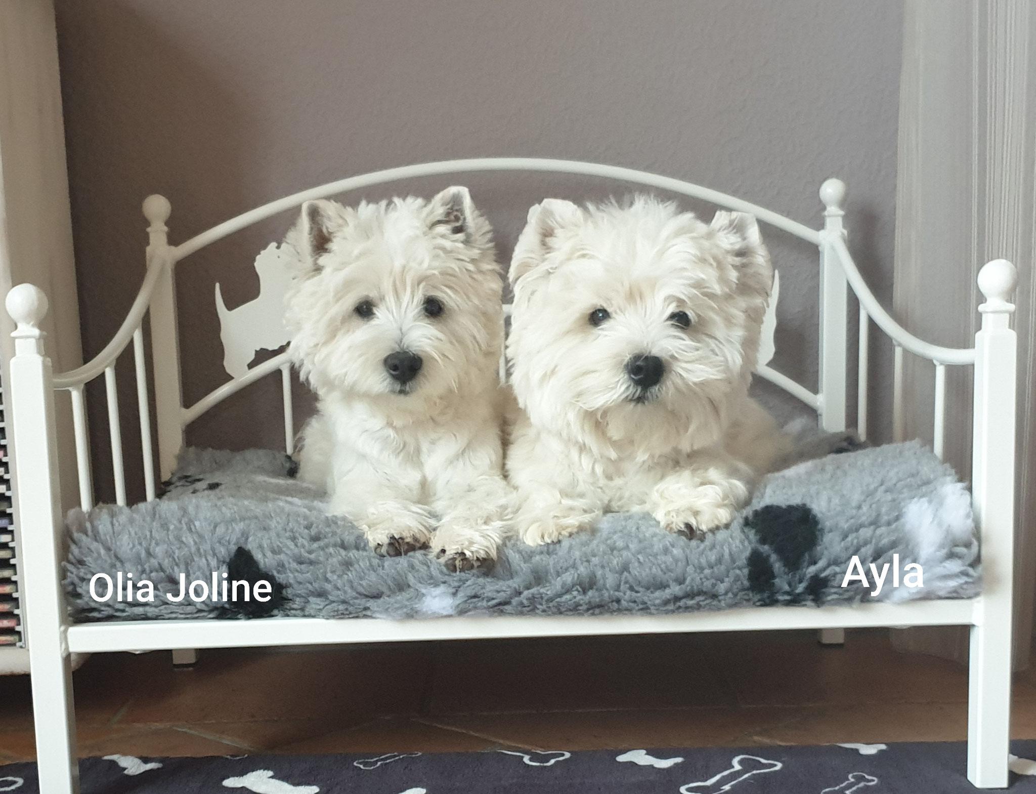 Olia Joline und Ayla 04/2019