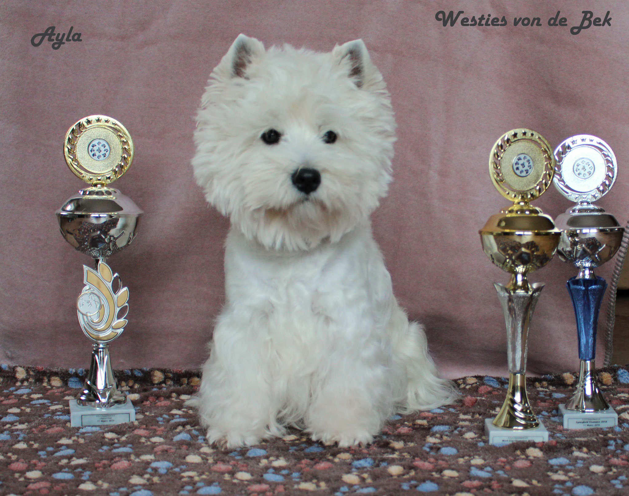 """Ayla am 11.03.2018 """"Best in Show"""""""