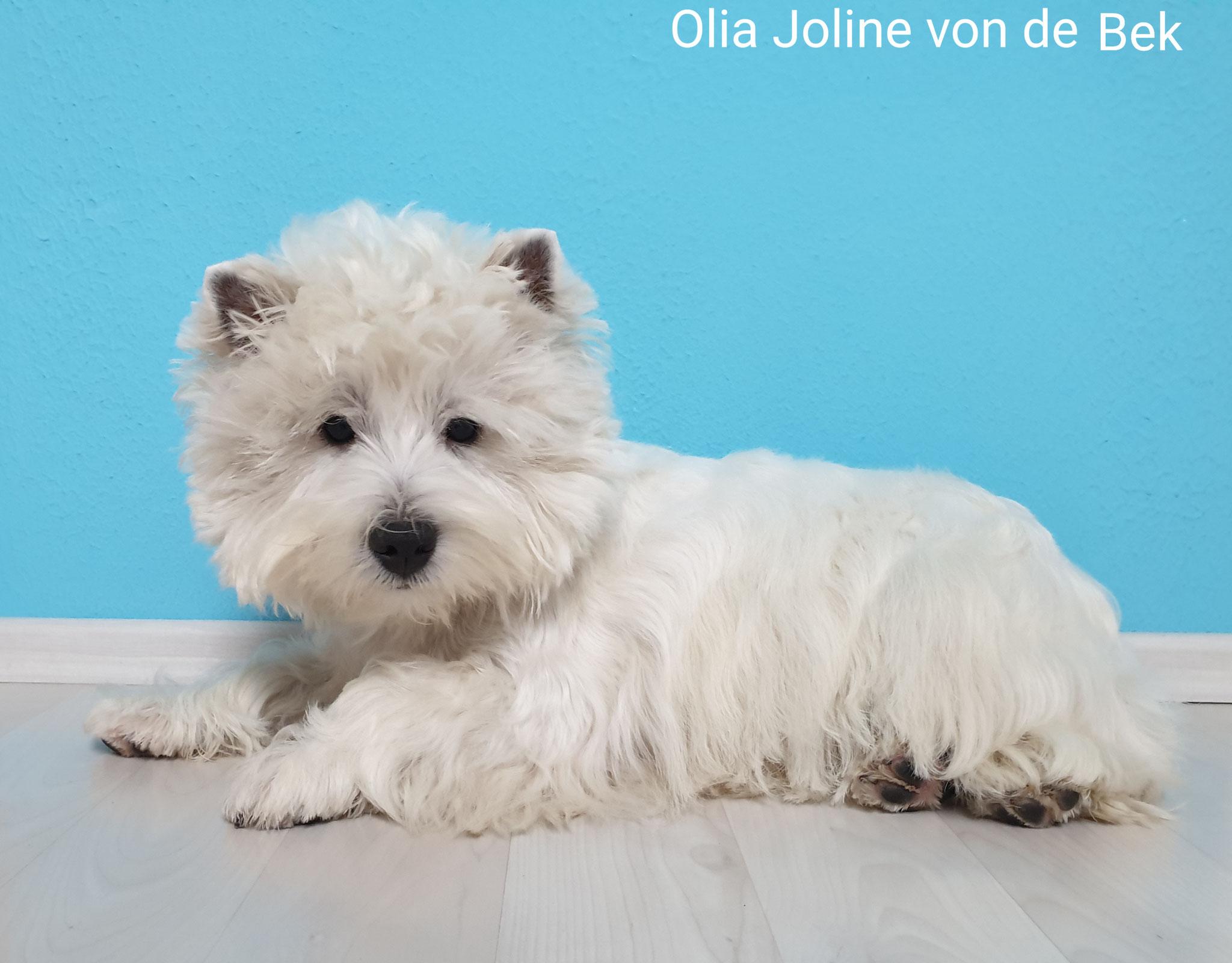 Olia Joline 11/2019