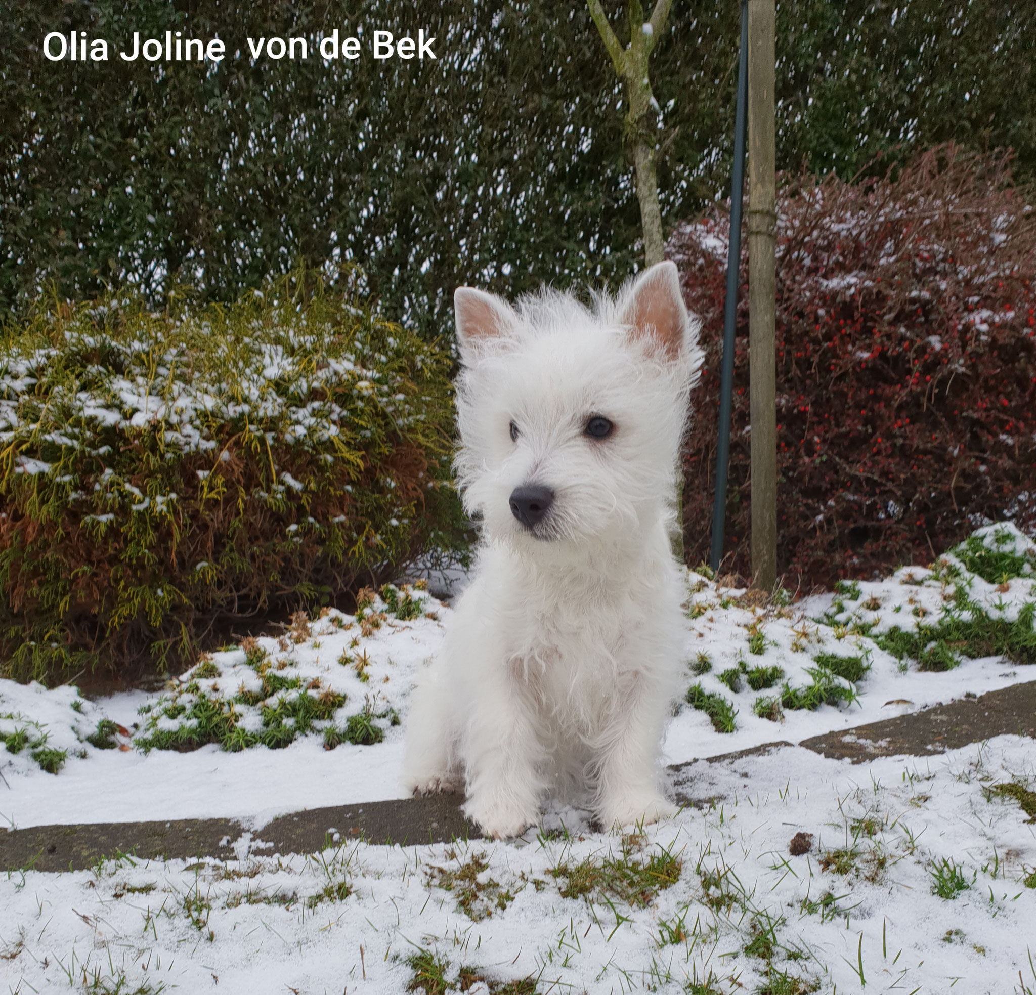 Olia Joline 12/2019