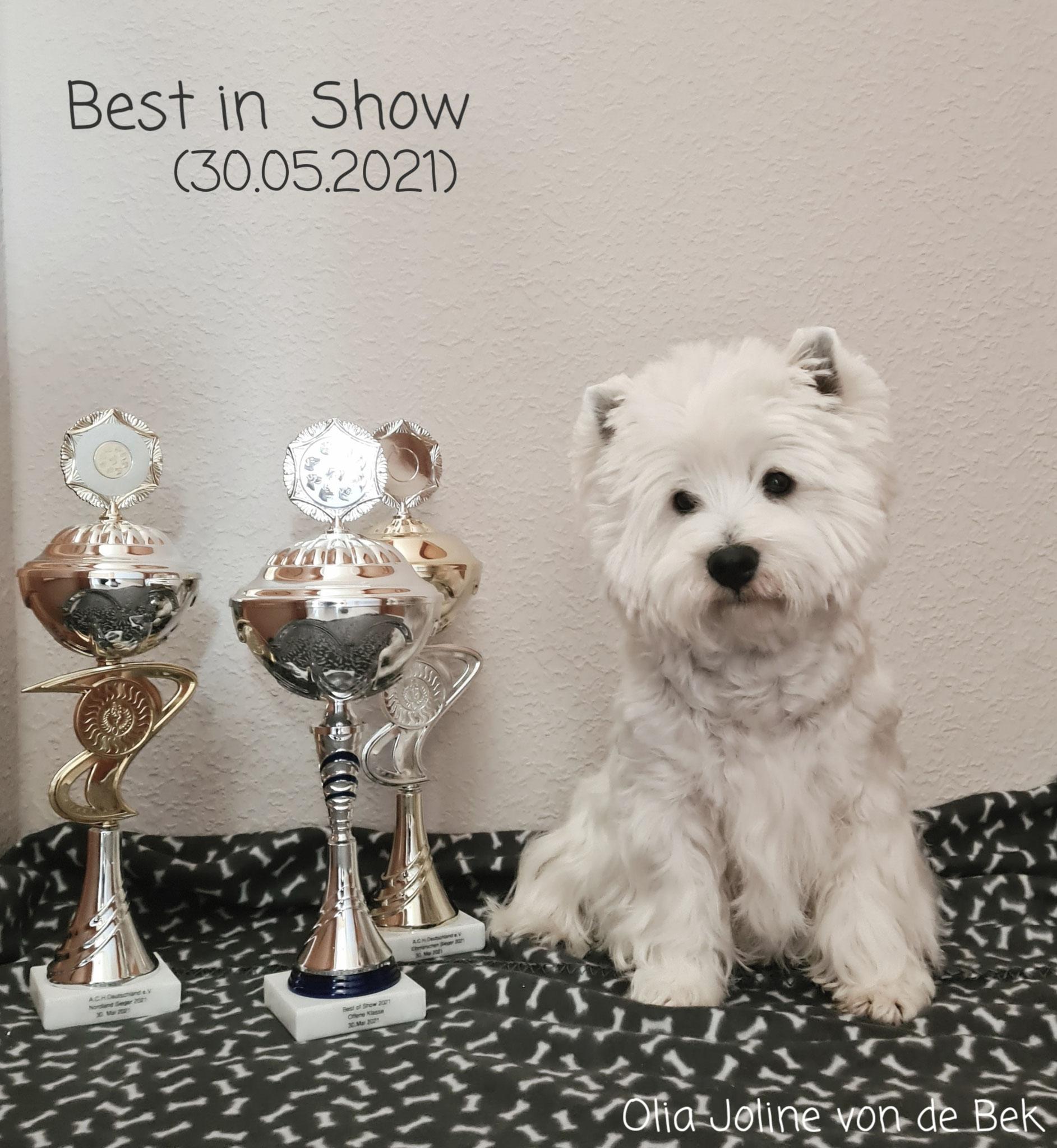"Olia Joline ""Best in Show"" 30.05.2021"