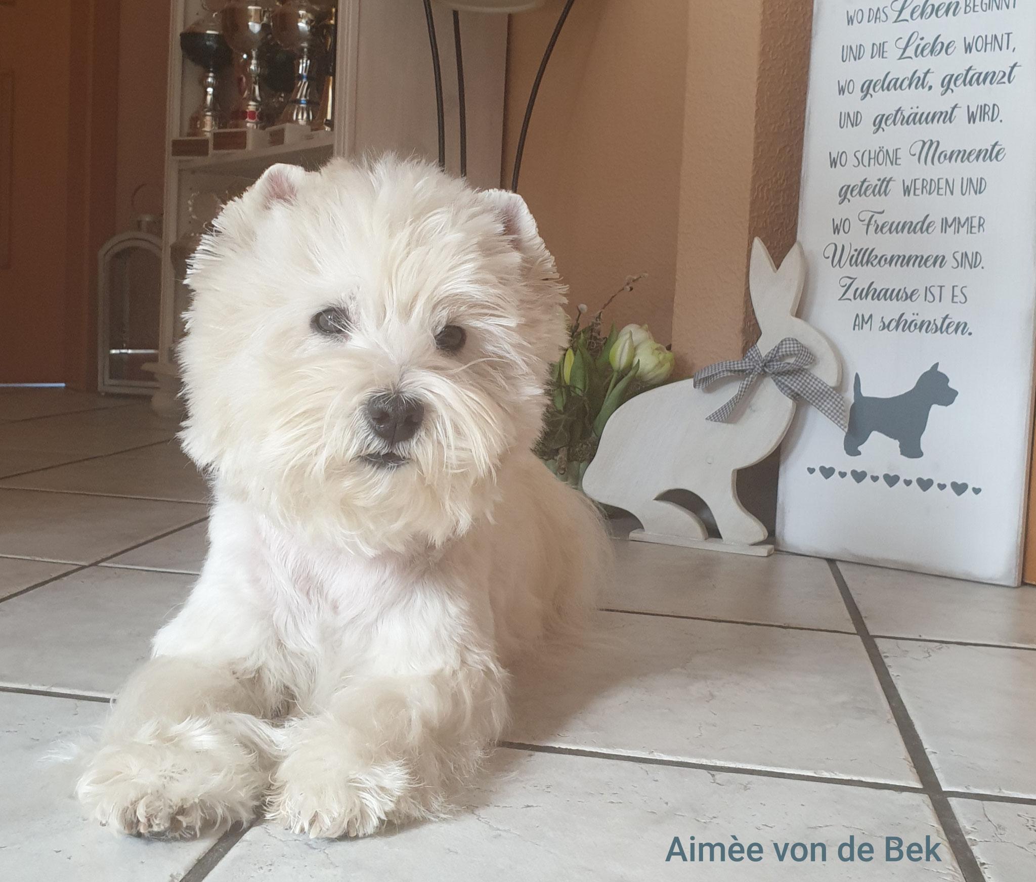 Aimée von de Bek 04/2020