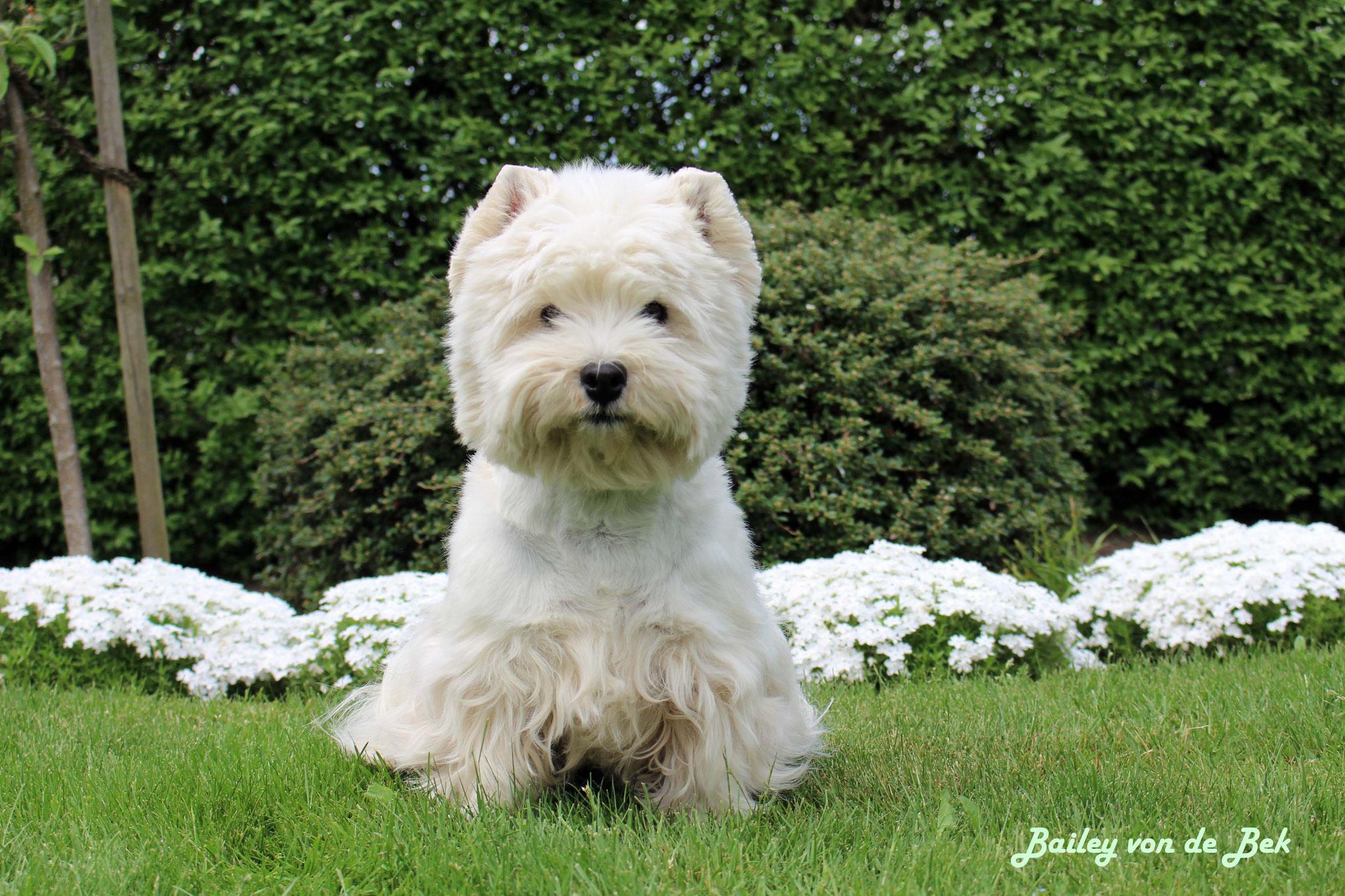 Happy Birthday! Am 11.06.18 wurde Bailey 8 Jahre alt.