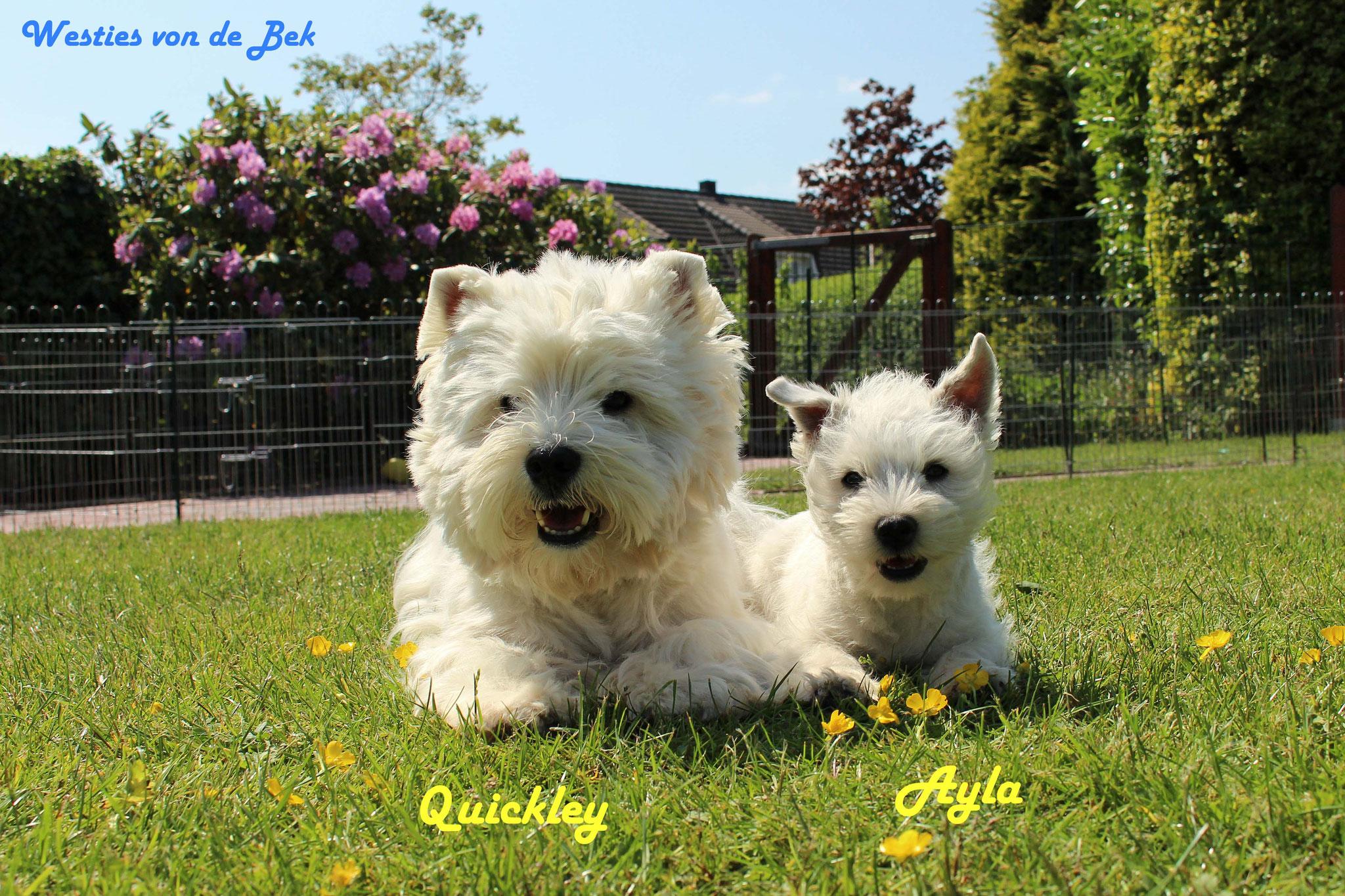 Quickley und Ayla mit 12 Wochen