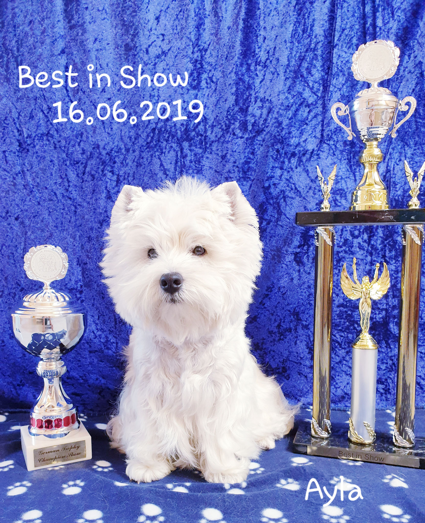 """Ayla """"Best in Show"""" am 16.06.2019"""