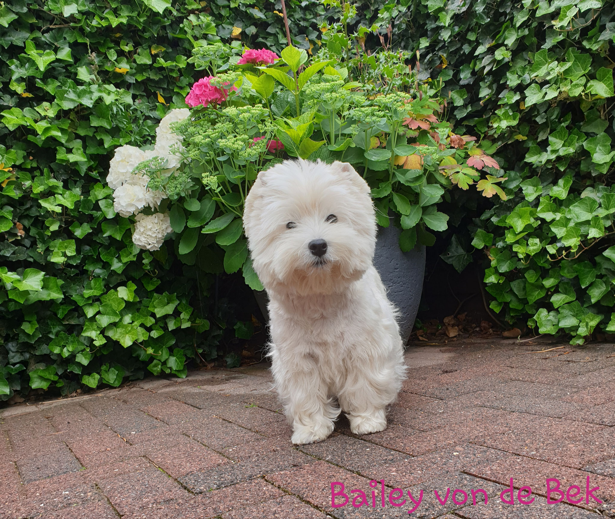 Bailey im Juli 2019