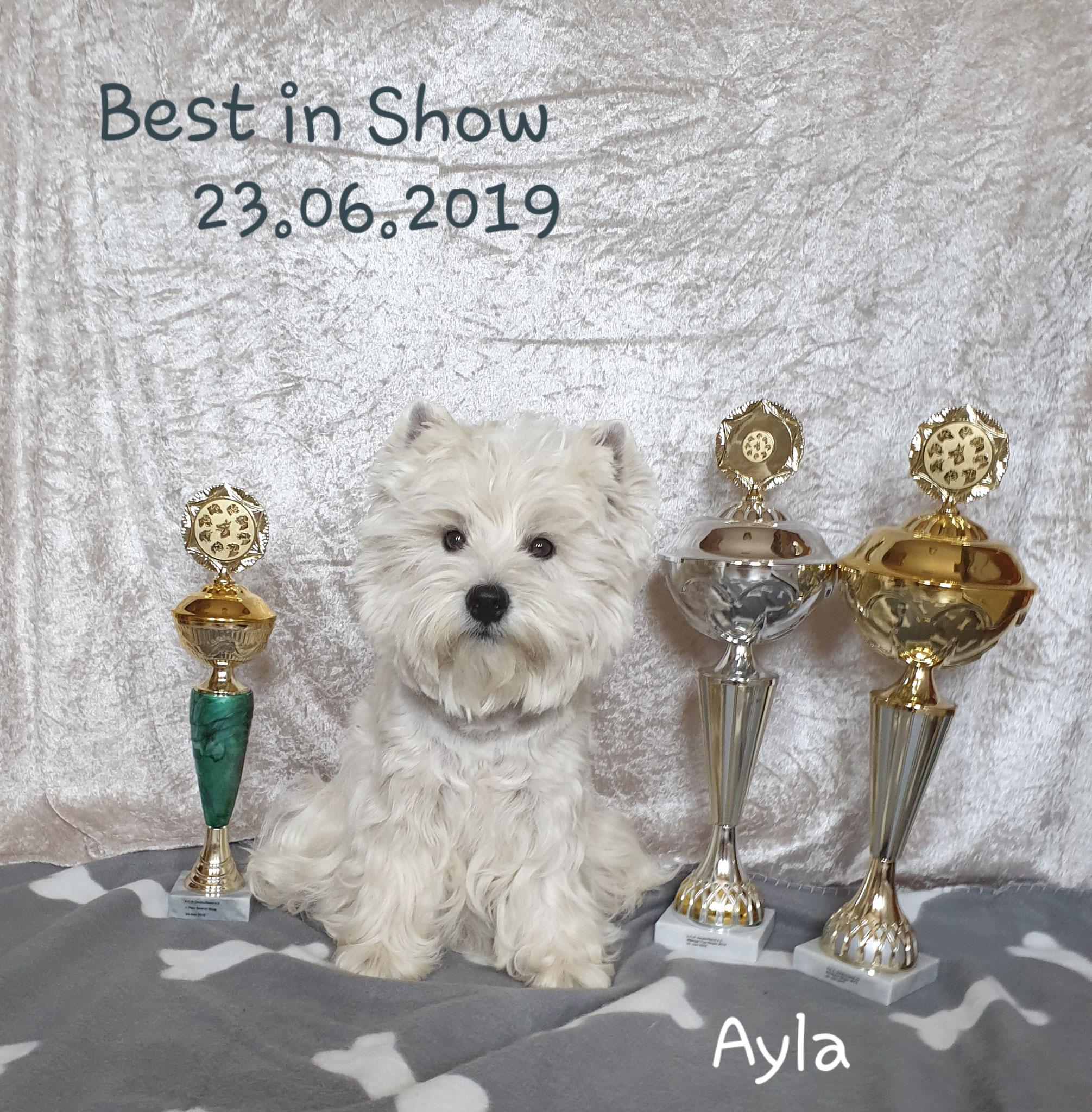 "Ayla ""Best in Show"" 23.06.2019"