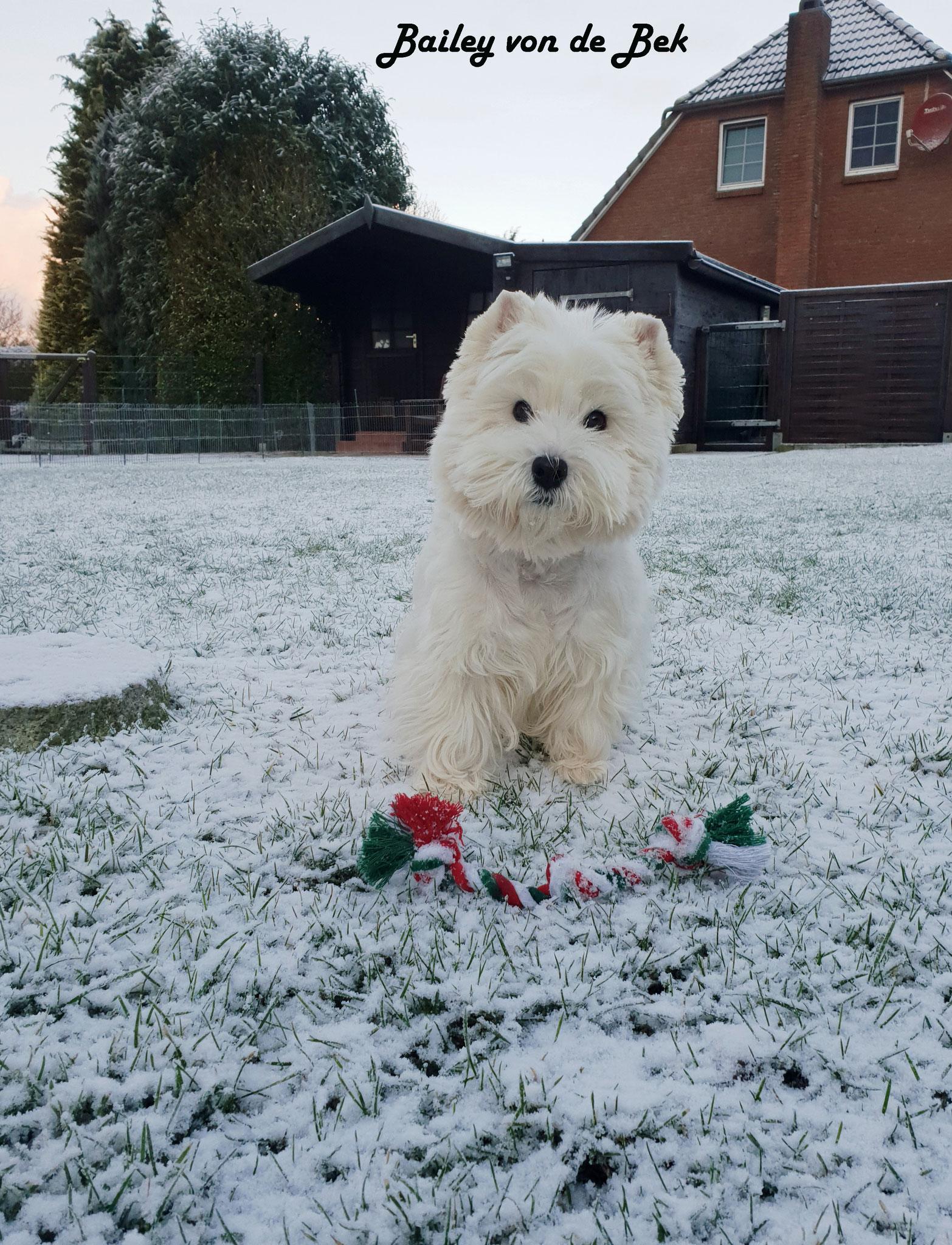 Bailey im Januar 2019