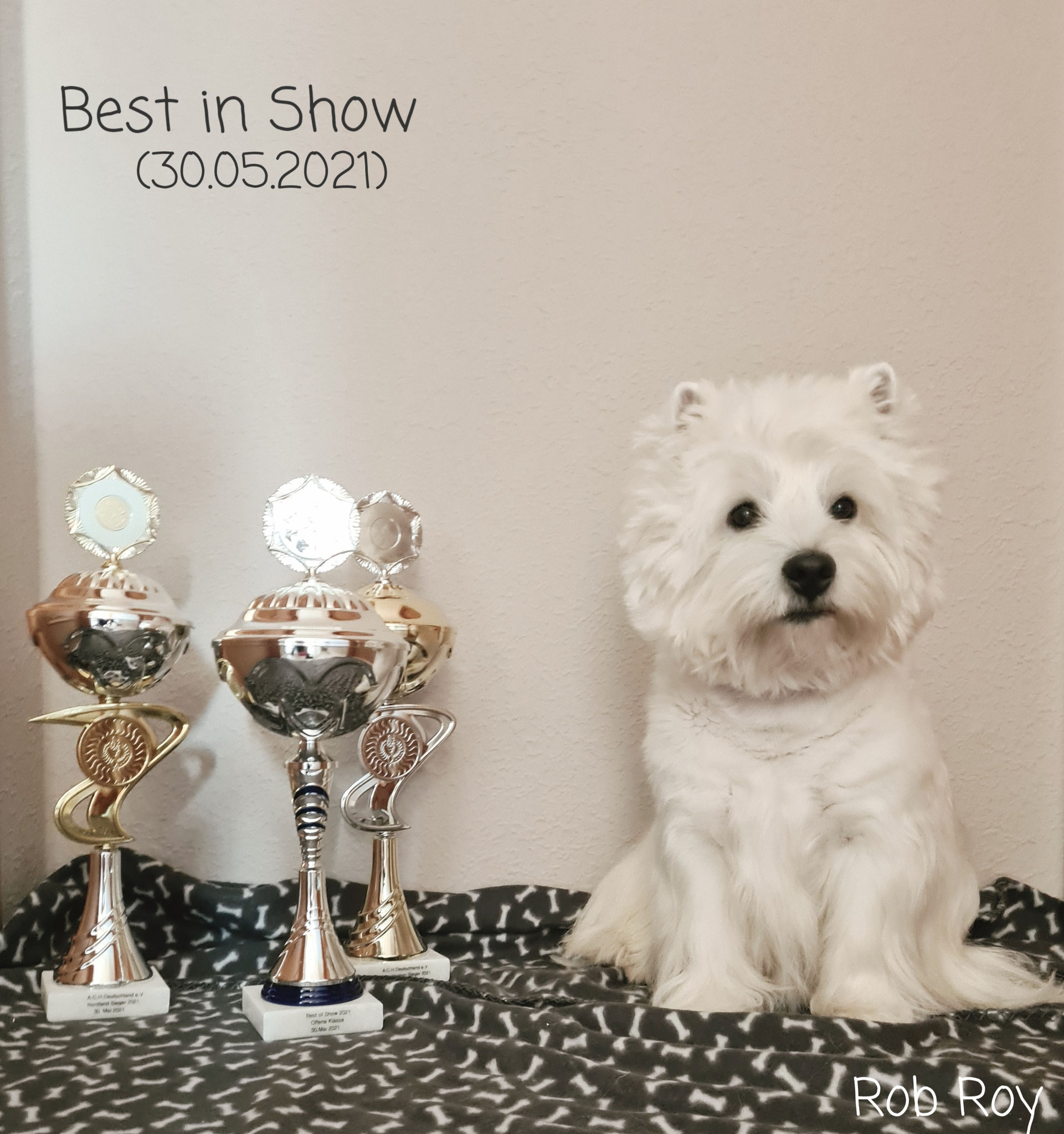 """Rob Roy """"Best in Show"""" 30.05.2021"""