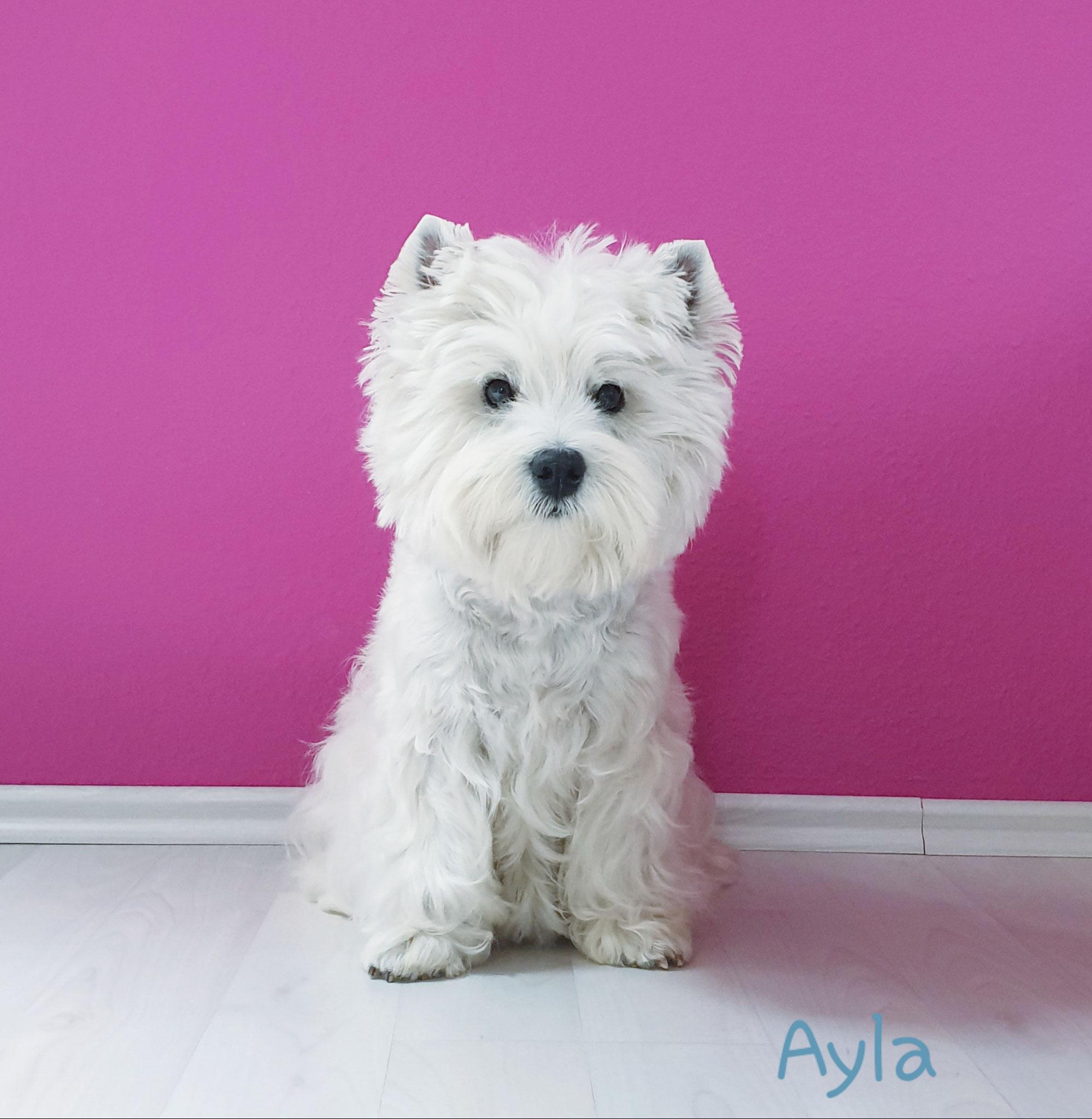 Ayla im Juni 2019