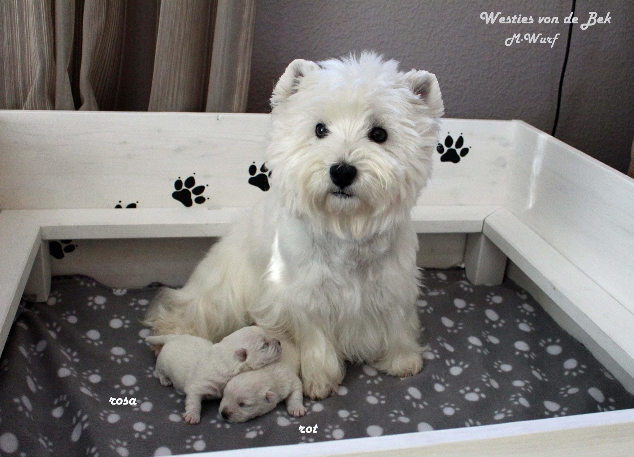 M-Wurf 10 Tage alt mit Mama