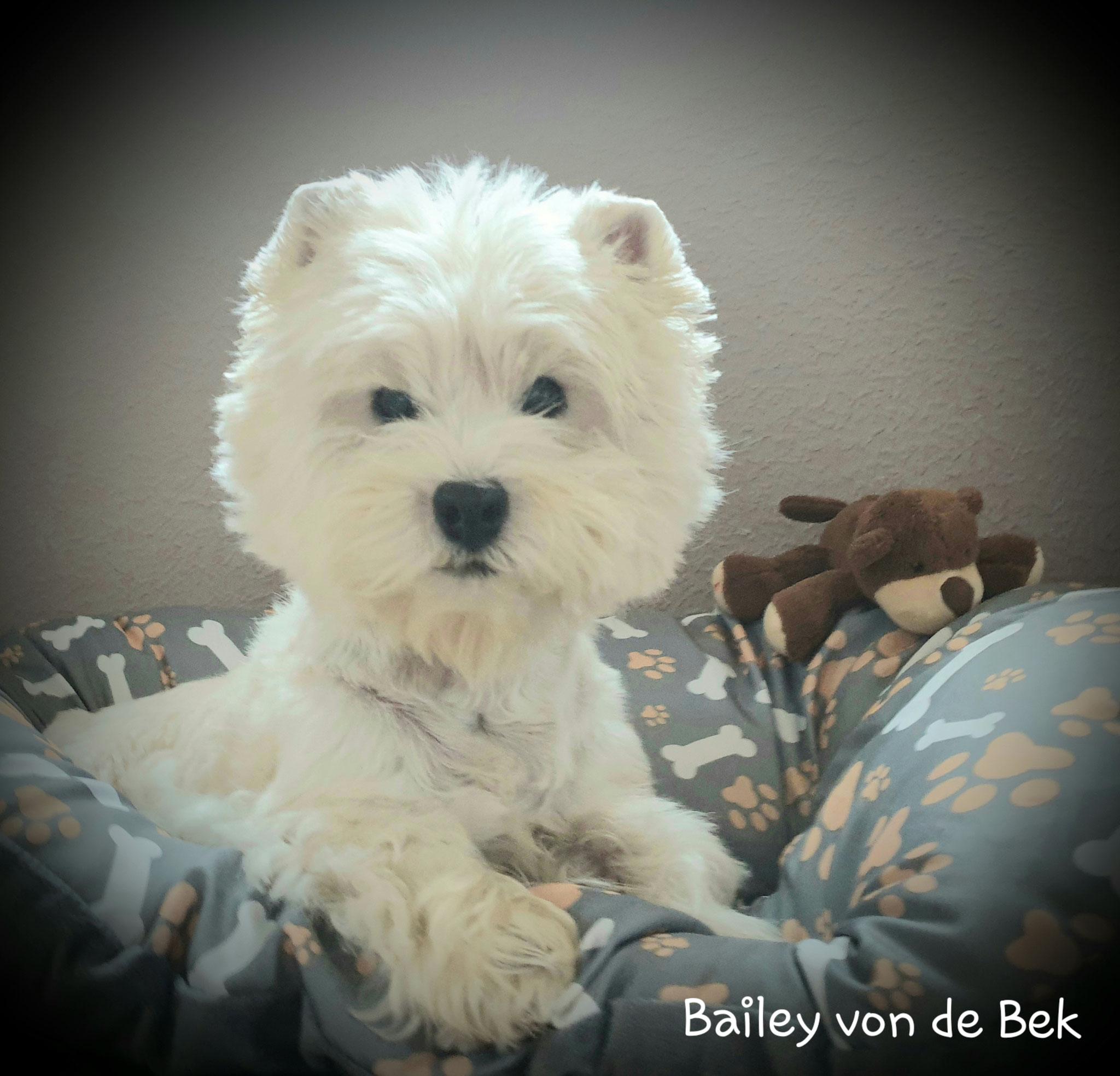 Bailey im Oktober 2019