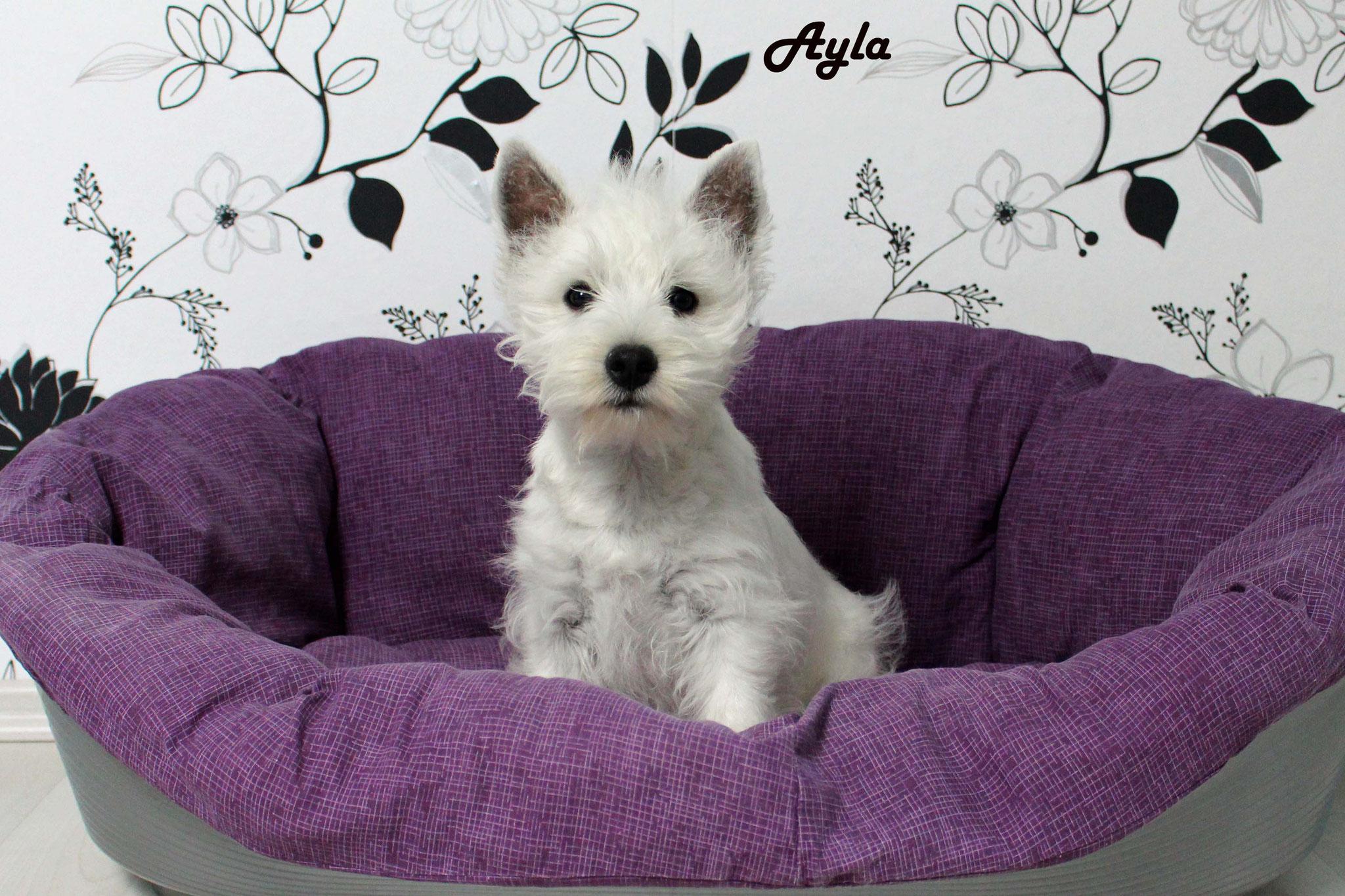 Ayla mit 14 Wochen