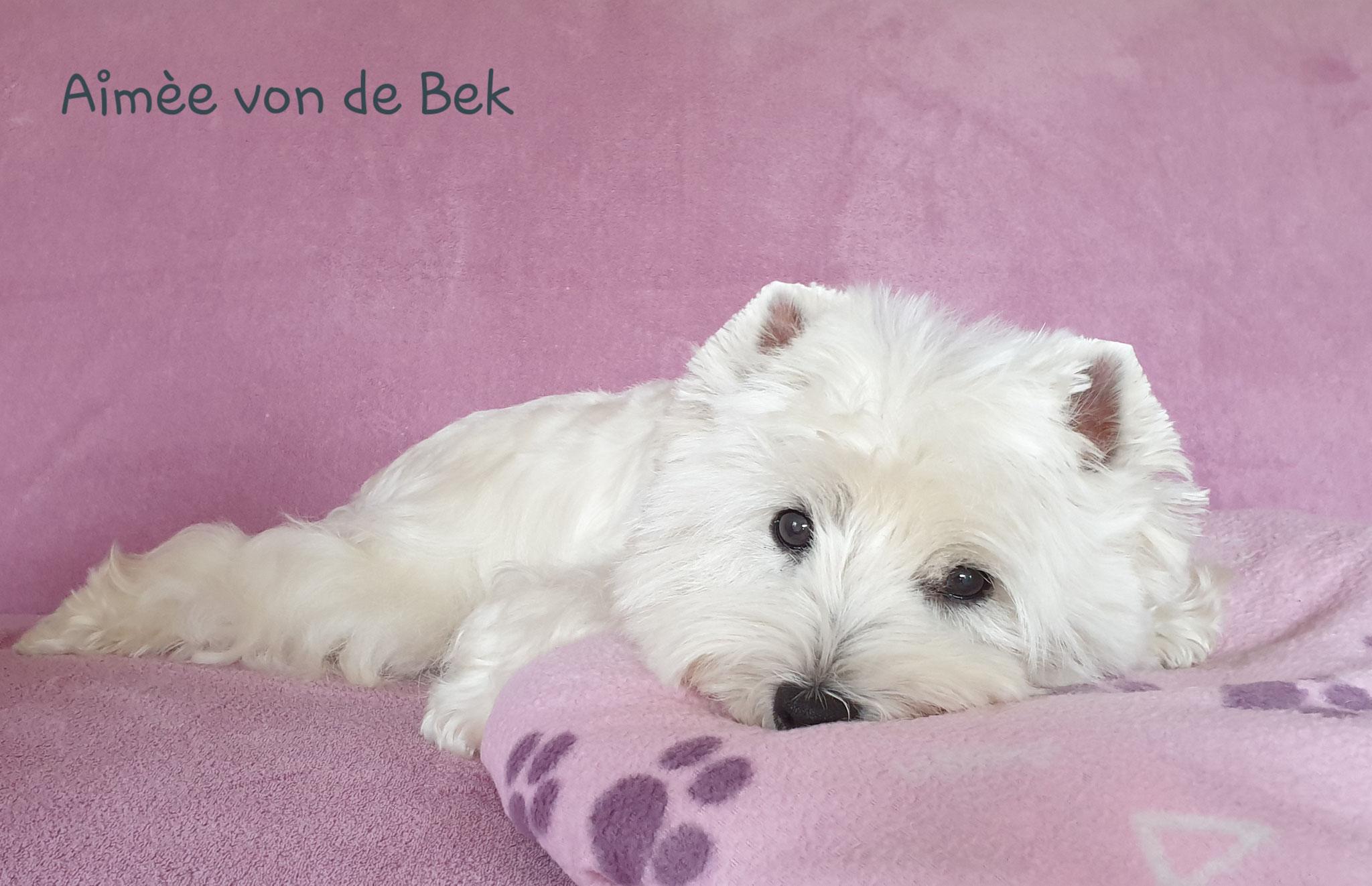 Aimée von de Bek 08/2019