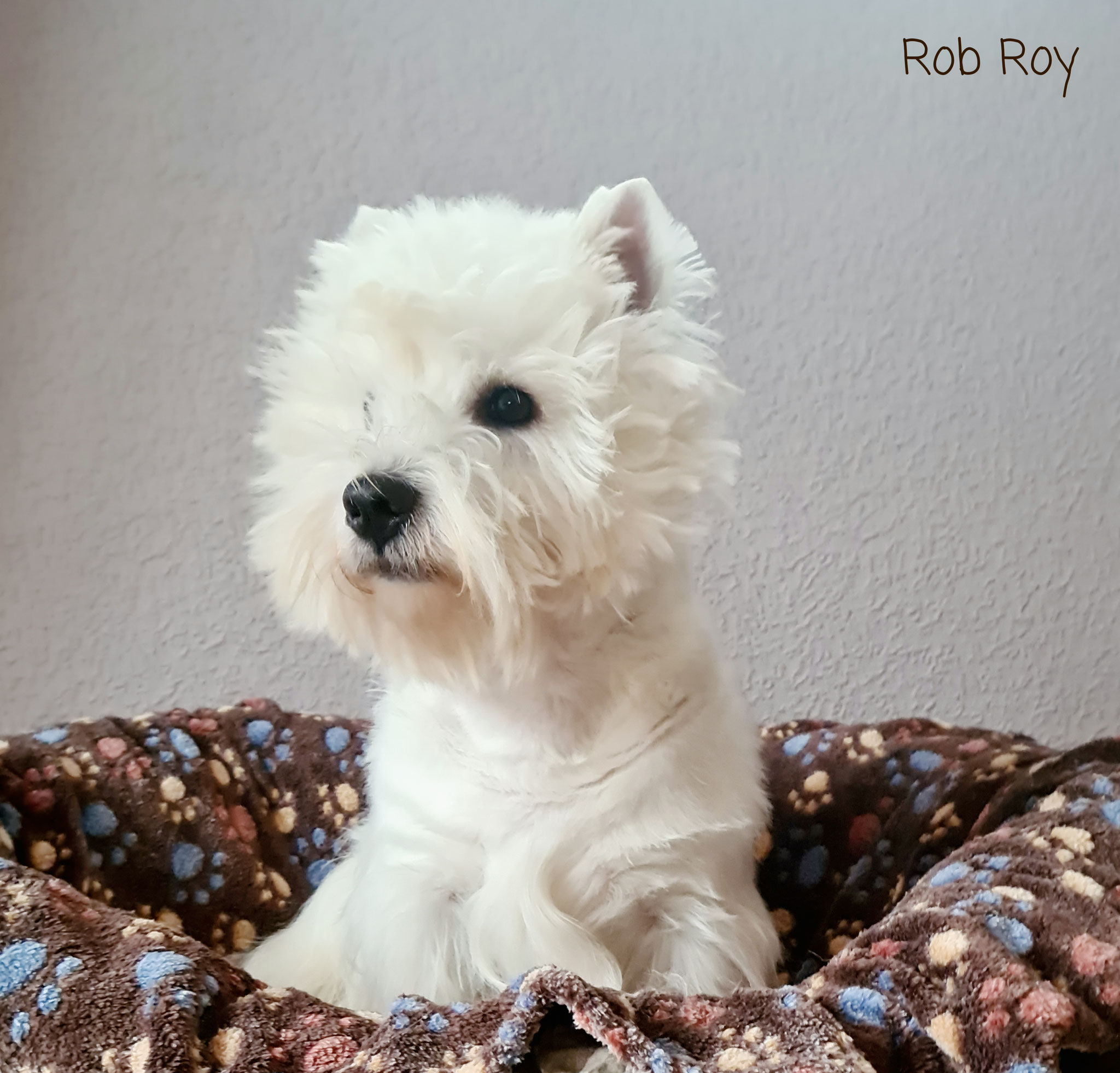 Rob Roy 02/2021
