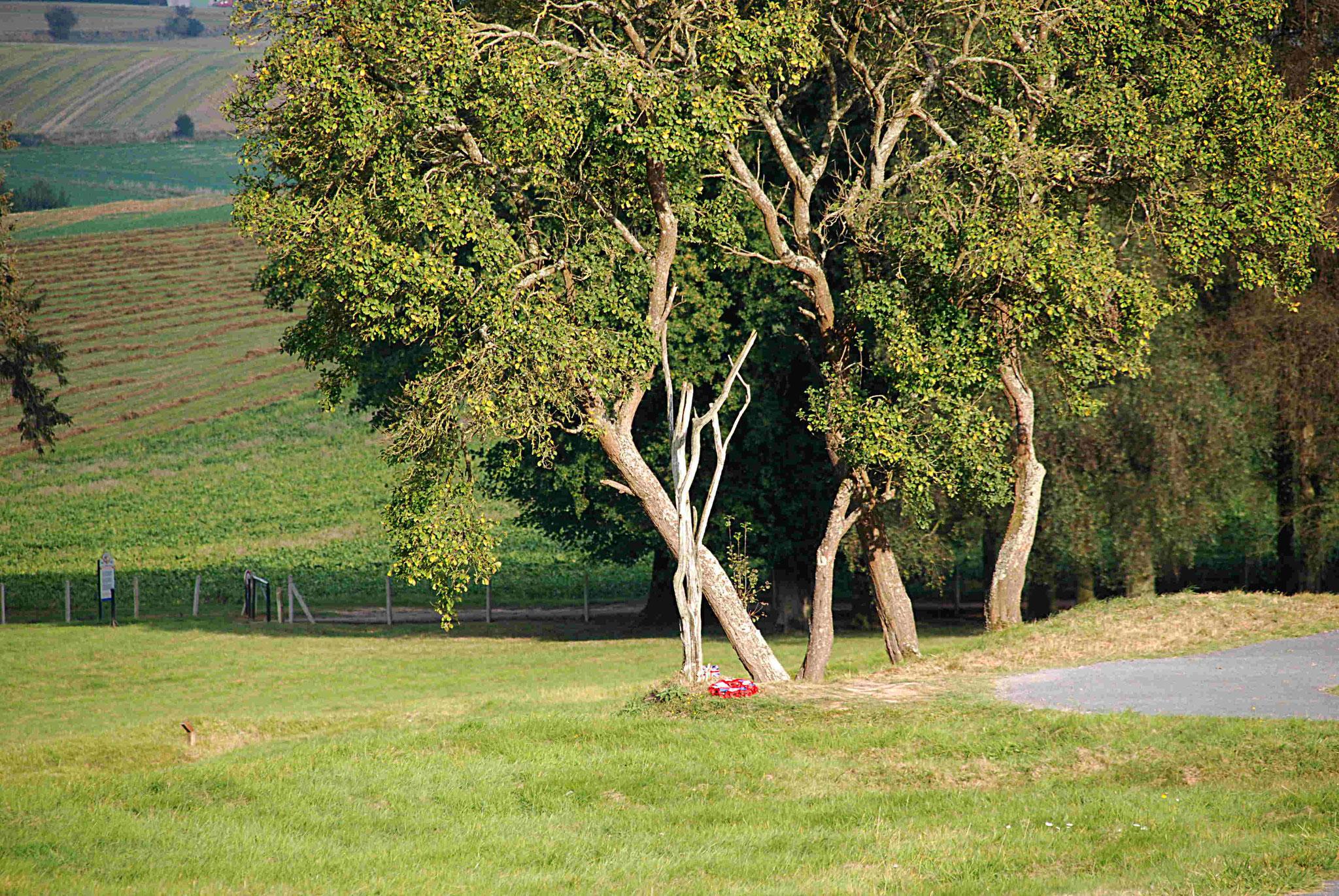 """""""L'arbre du danger"""", dans un secteur particulièrement meurtrier"""